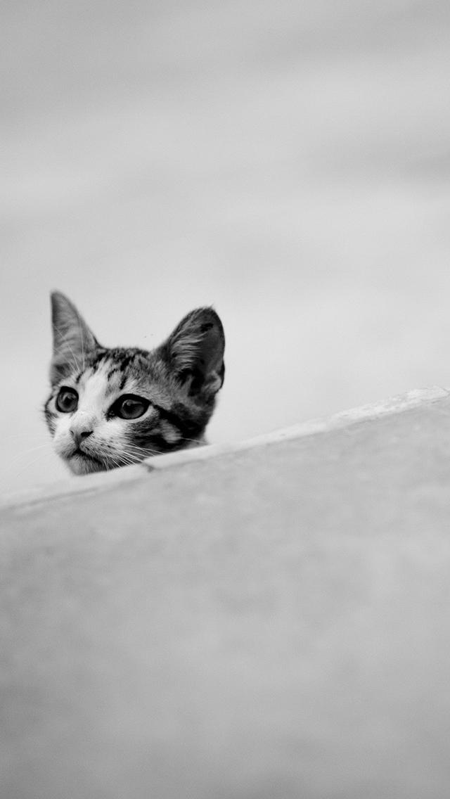 Cat 3Wallpapers iPhone Cat