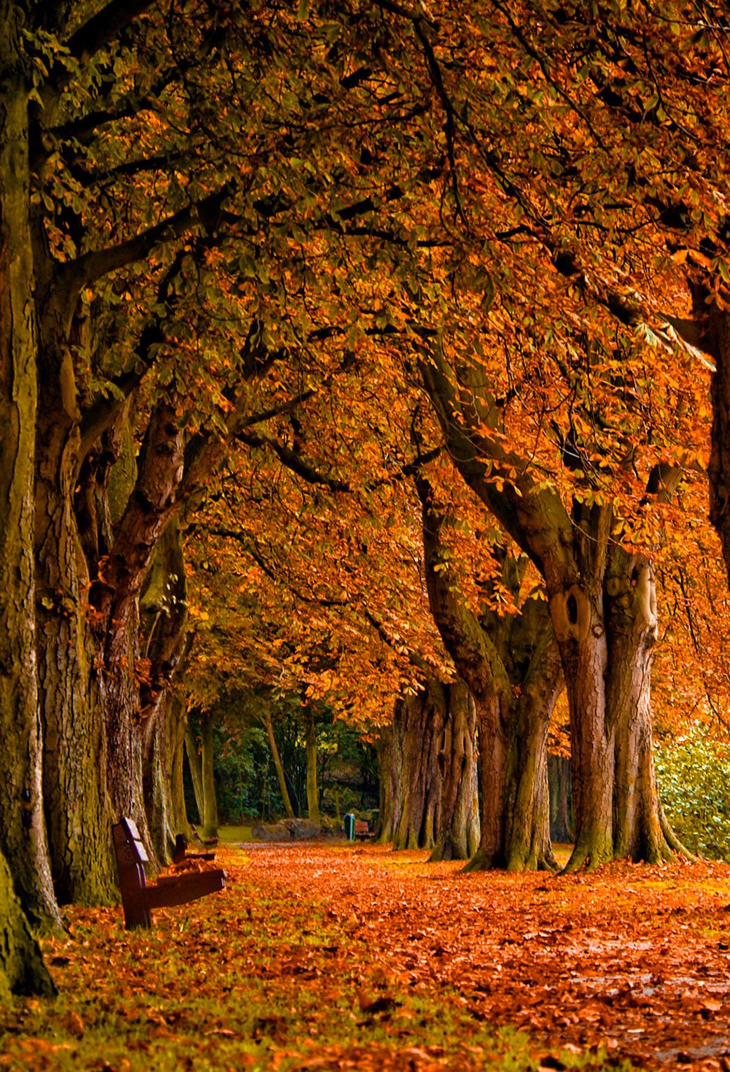 Autumn Wallpaper For Iphone X 8 7 6 Free Download On