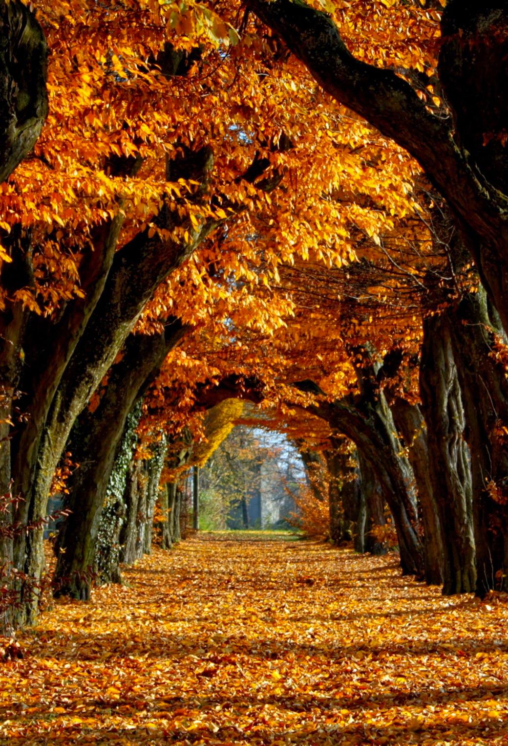 Autumn Autumn Wallpaper For Iphone X 8 7 6 Free