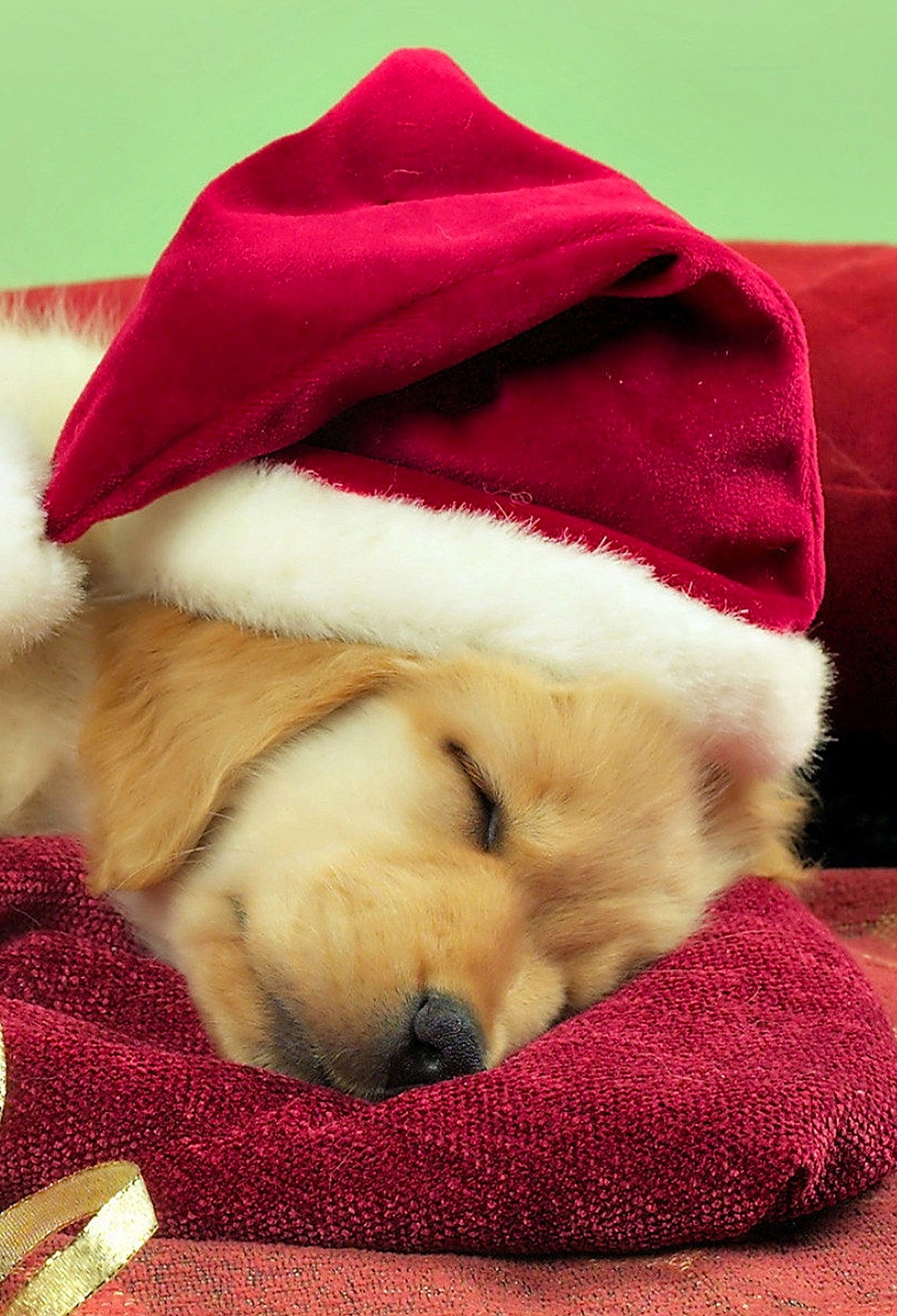 Christmas Puppies3Wallpapers IPhone Parallax Puppies