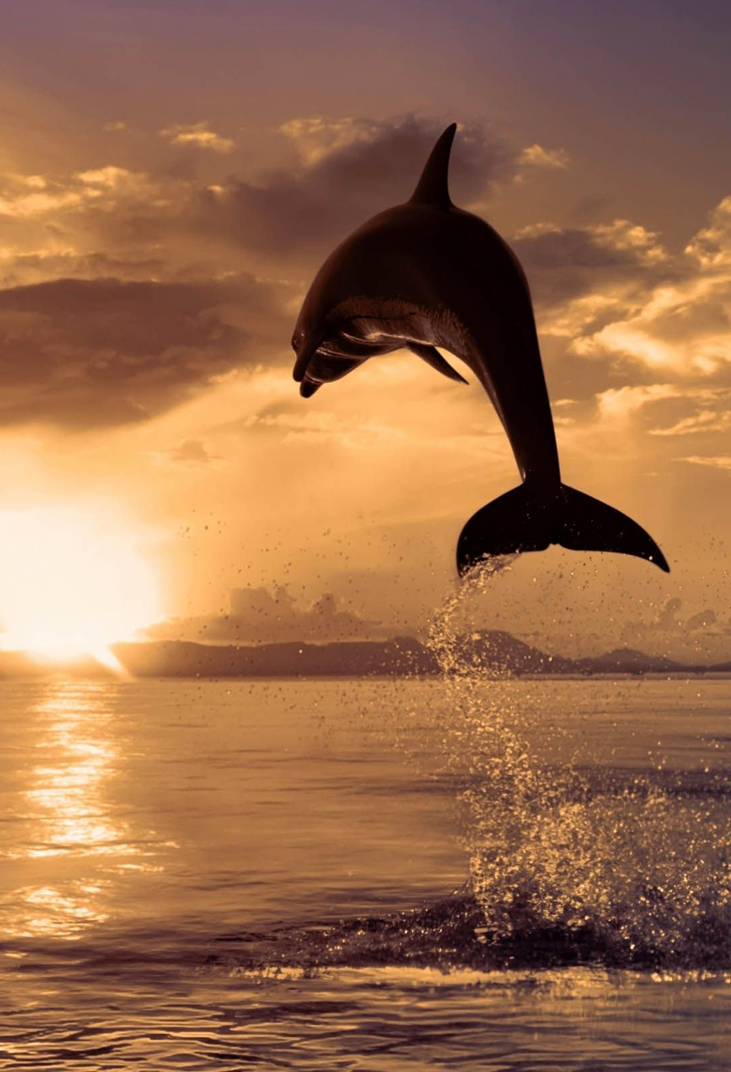 Jumping Dolphin 3Wallpapers iPhone Parallax Jumping Dolphin