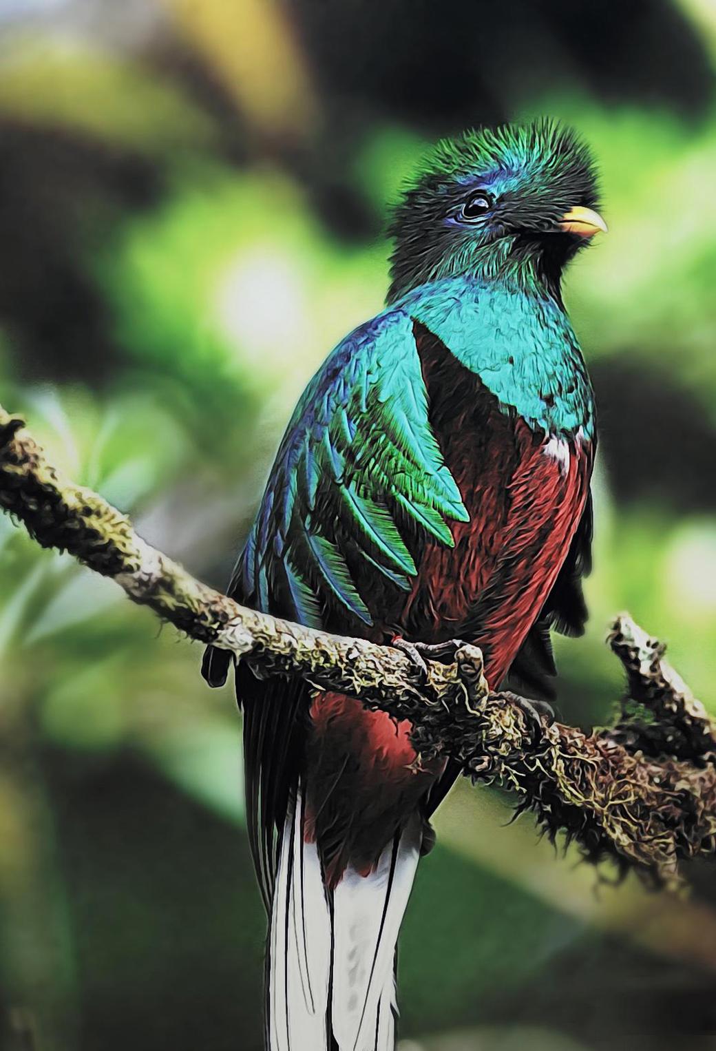 Quetzal Birds 3Wallppaers iPhone Parallax Quetzal Birds