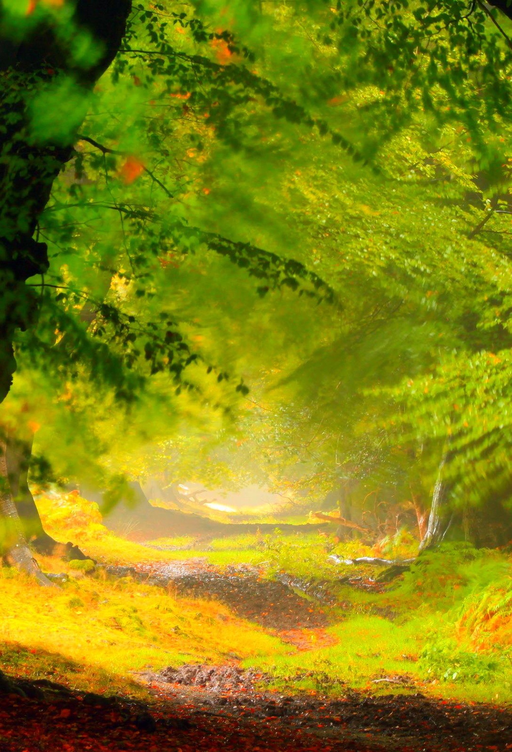 Beautiful Forest 3Wallpapers iPhone Parallax Beautiful Forest