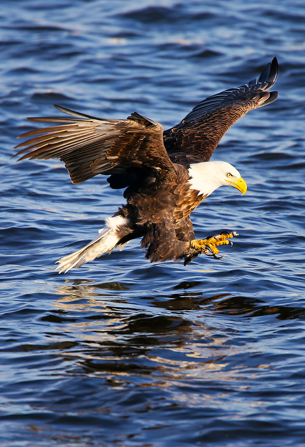 Birds Eagle 3Wallpapers iPhone Parallax Birds Eagle