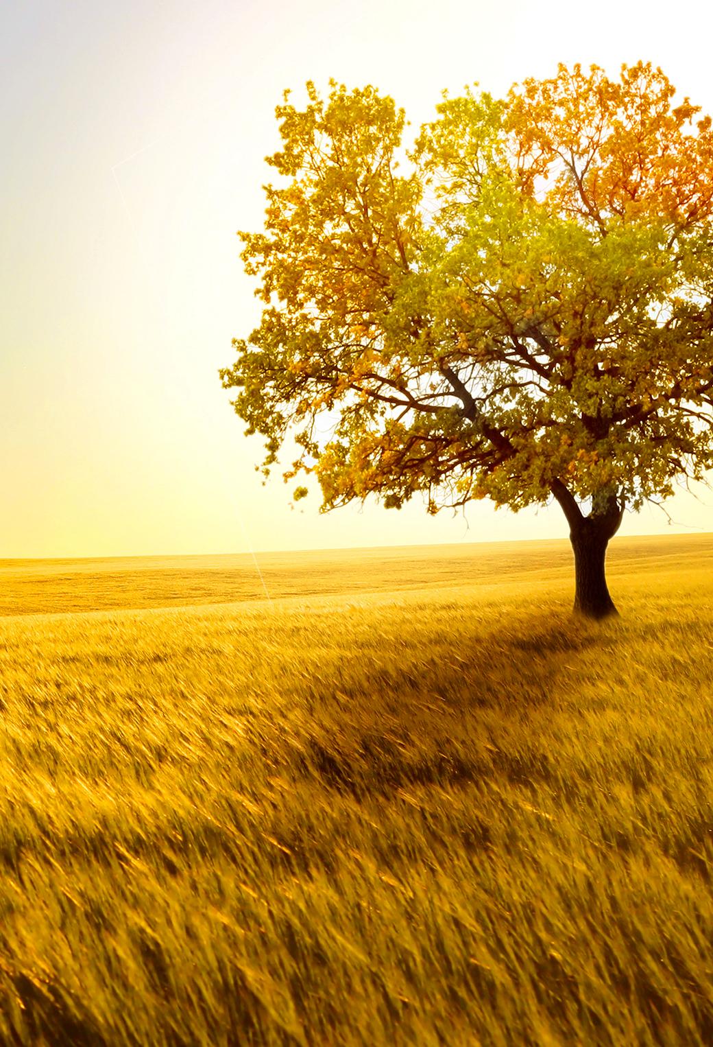 Tree Field 3Wallpapers iPhone Parallax Tree Field