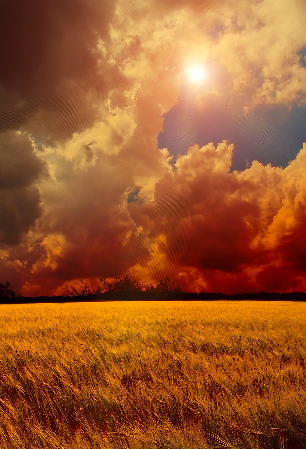 Yellow Wheat Field 3Wallpapers iPhone Parallax Yellow Wheat Field