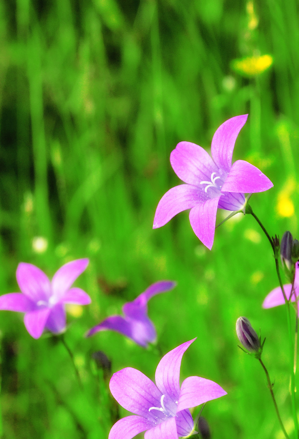 Purple Flower 3Wallpapers iphone Parallax Purple Flower