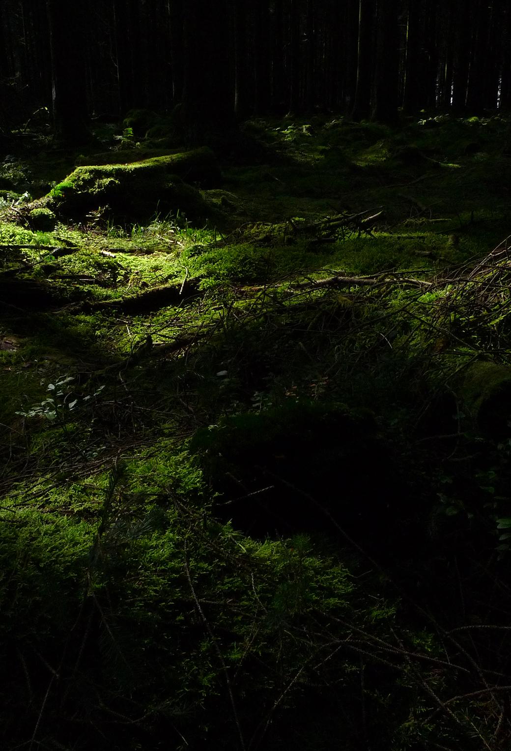 Forest Floor 3Wallpapers iPhone parallax Forest Floor