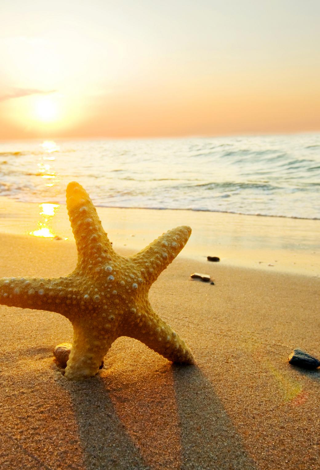 Starfish Sunset 3Wallpapers iPhone Parallax Starfish Sunset