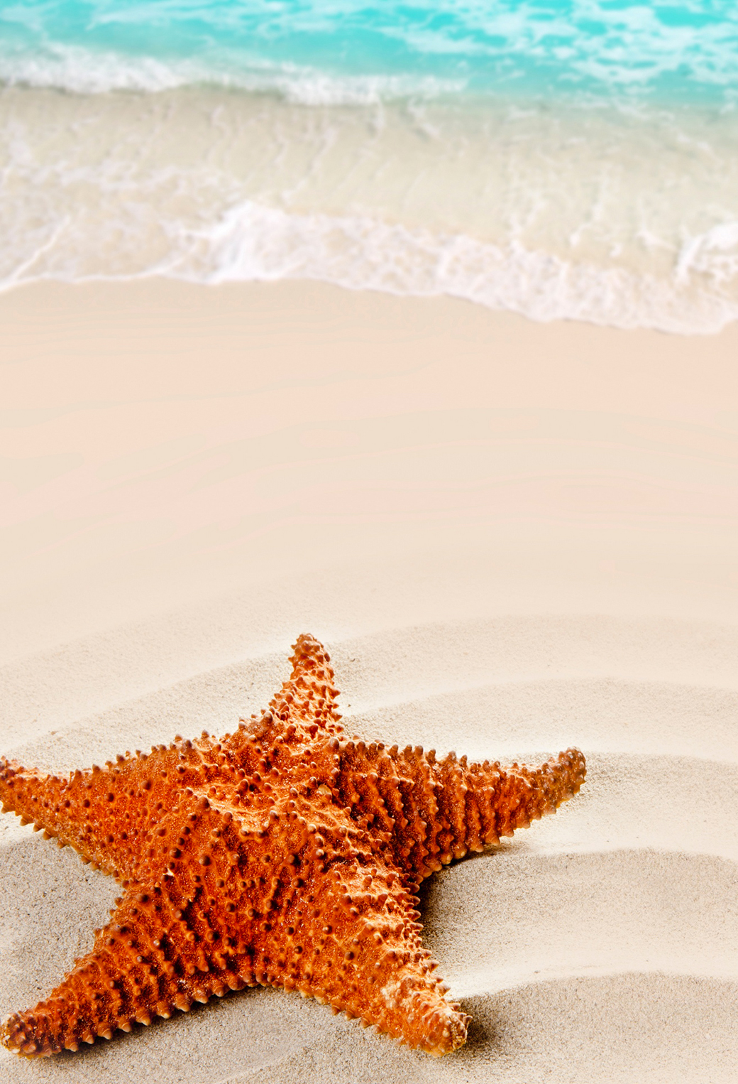 Starfish on the Beach 3Wallpapers iPhone Parallax Starfish on the Beach
