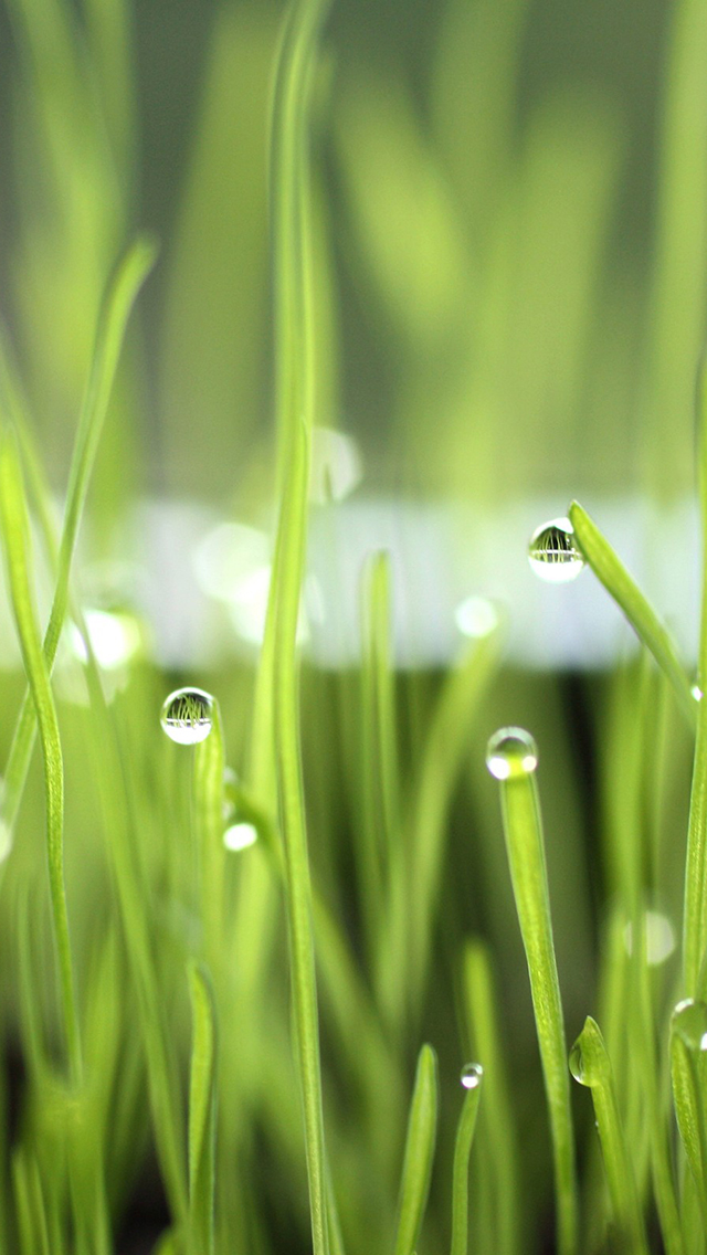 Droplets Of Water On Grass Wallpaper For Iphone X 8 7 6