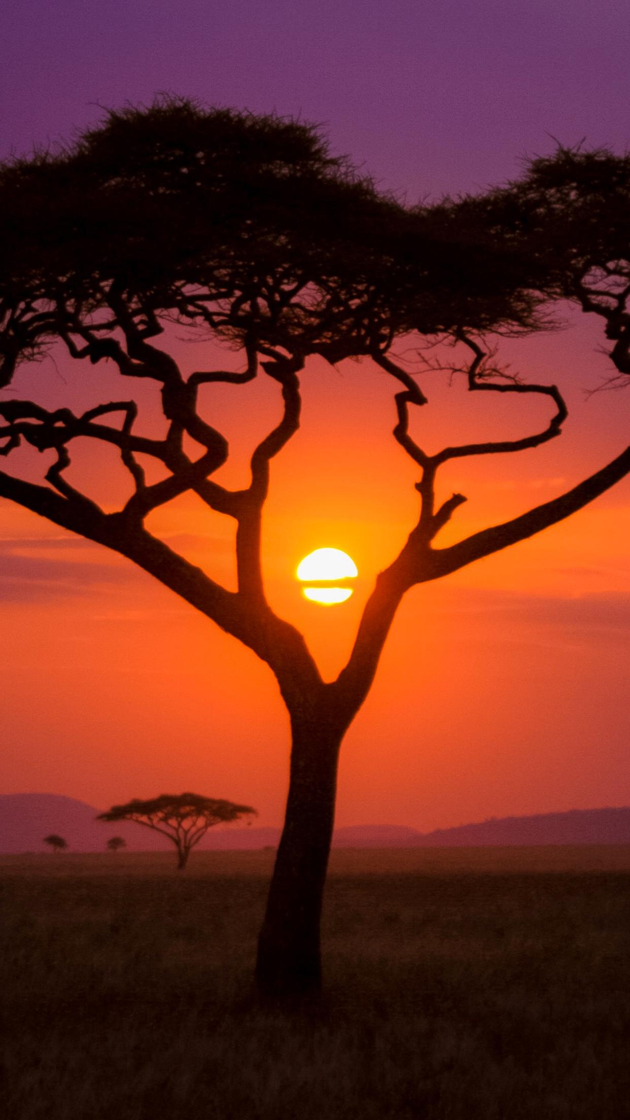 African Sunset 3Wallpapers iPhone Parallax African Sunset