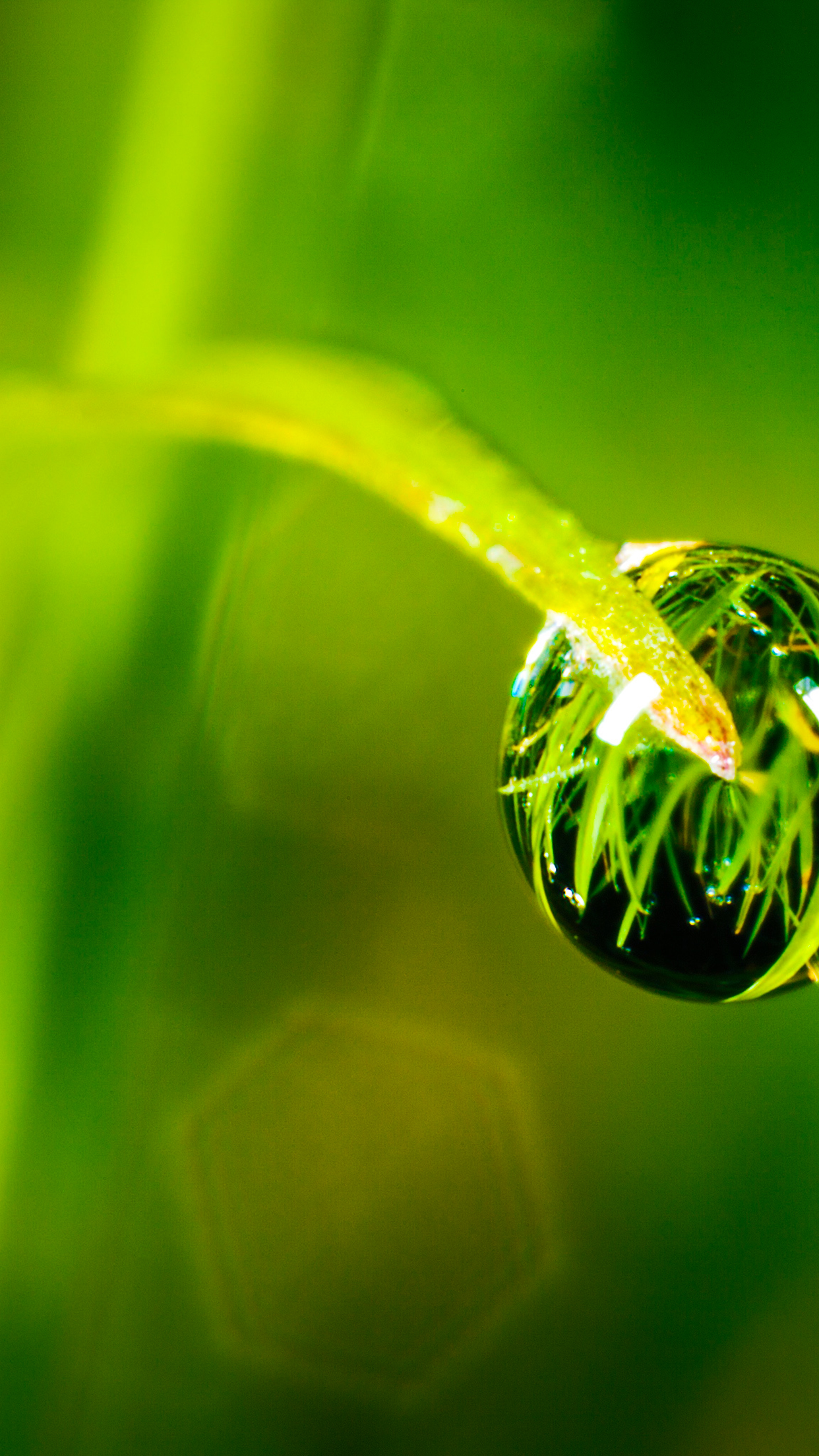 Dew Drop 3Wallpapers iPhone parallax Dew Drop