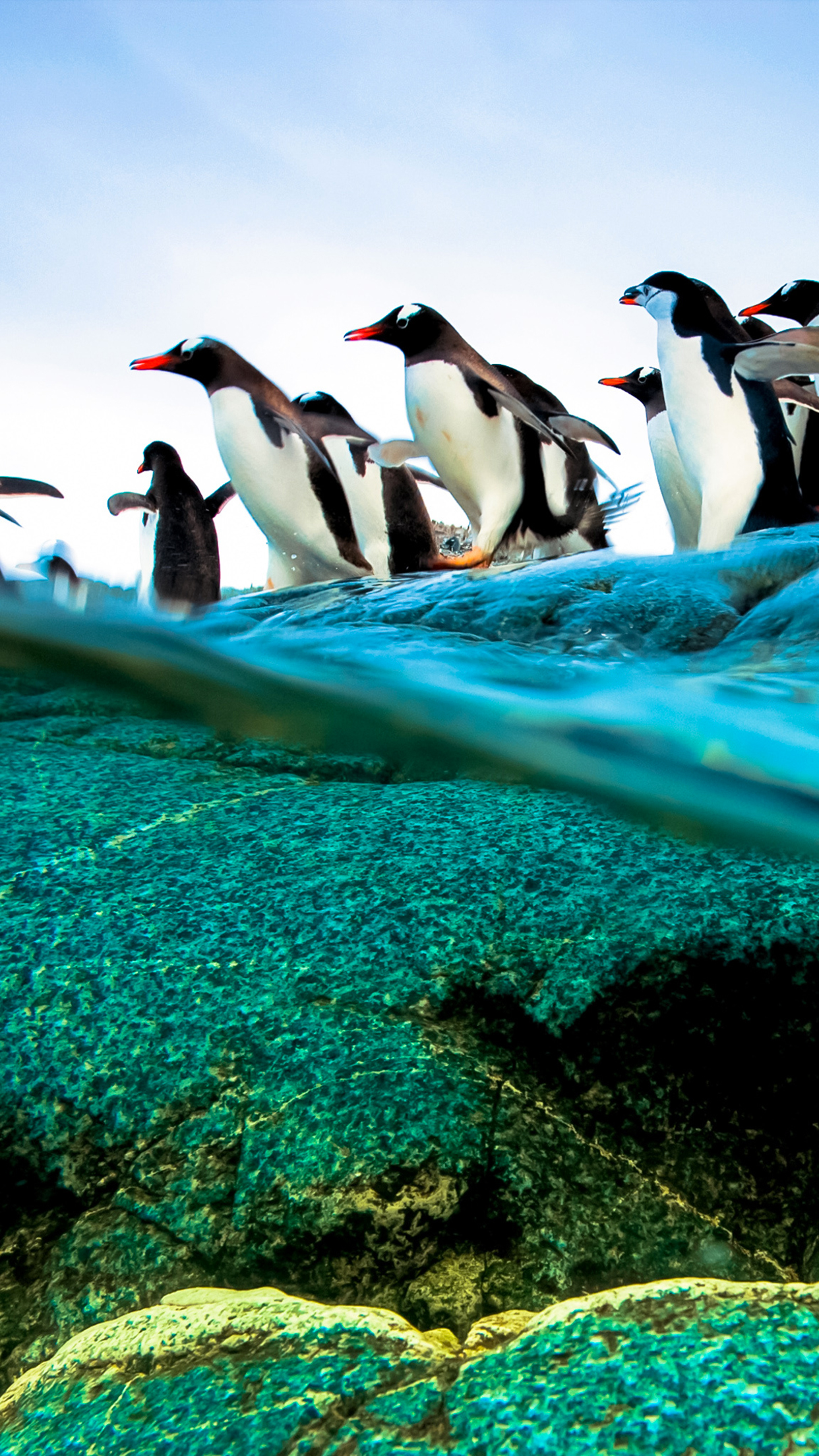 diving penguins wallpaper for iphone x, 8, 7, 6 - free download on