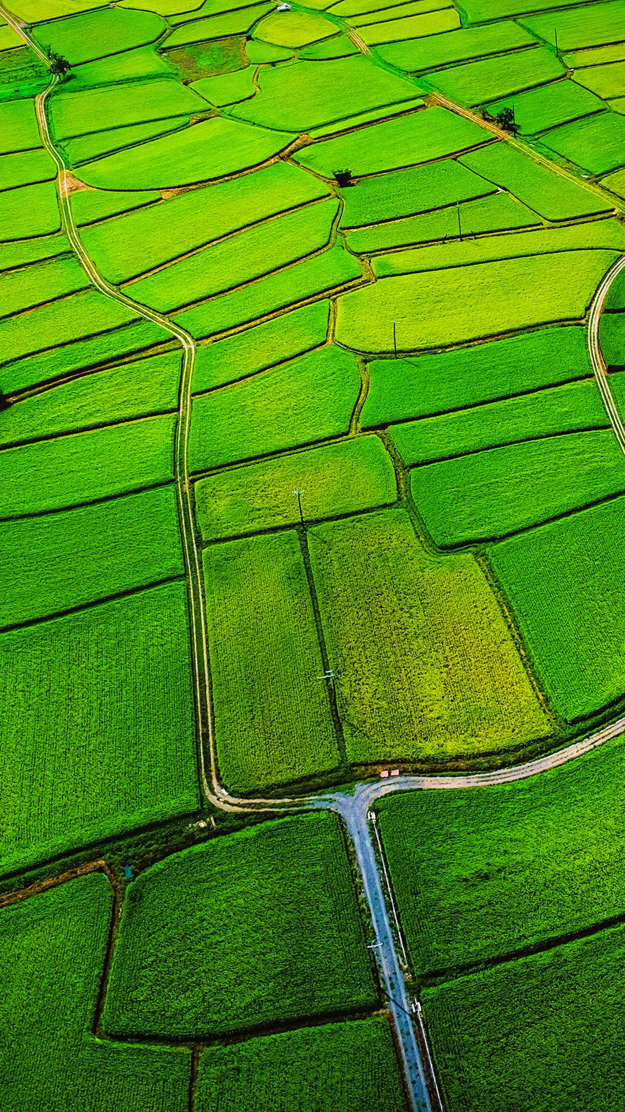 Paddy Fields 3Wallpapers iphone Parallax Paddy Fields