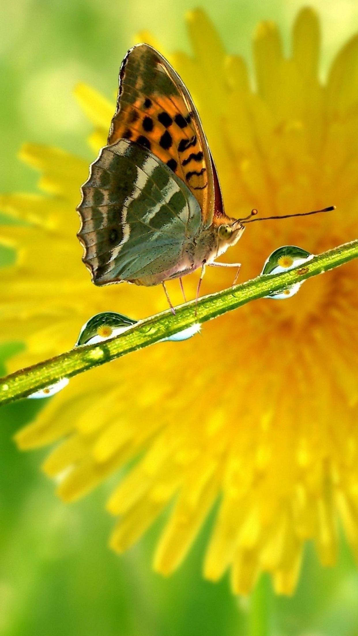 Butterfly Flower 3Wallpapers iPhone Parallax Butterfly Flower