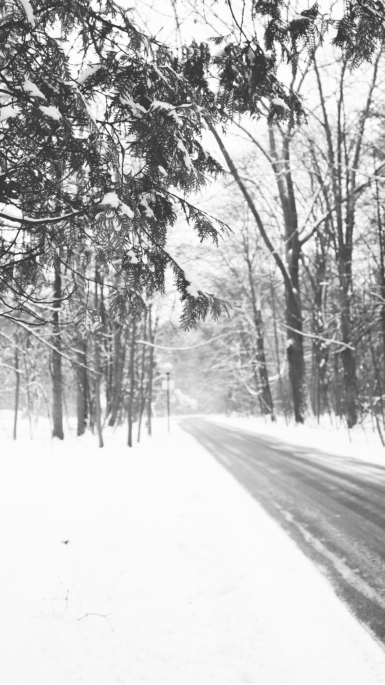 snow road iPhone Parallax 3Wallpapers Snow road