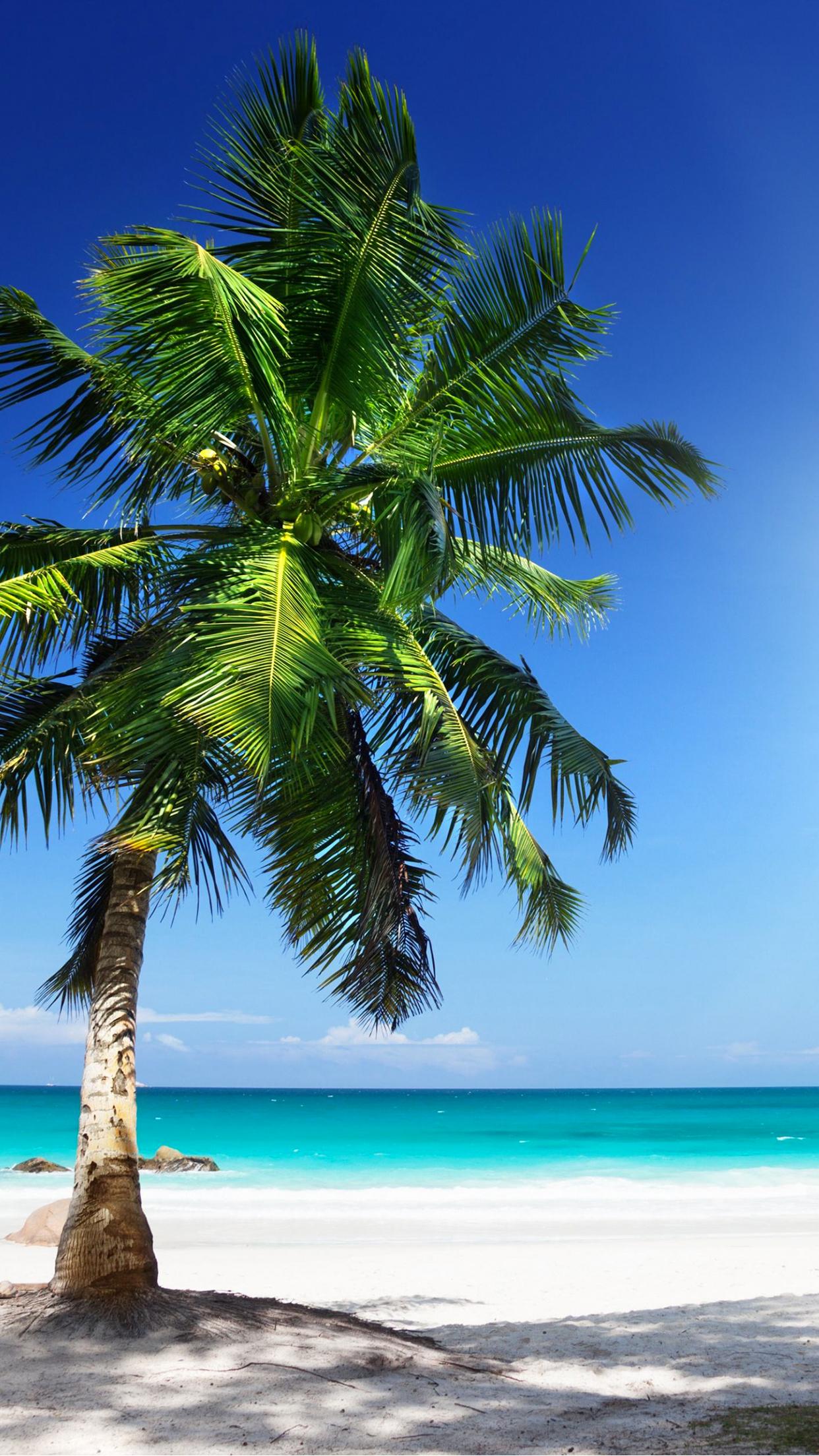 sunny beach iPhone 3Wallpapers Parallax Sunny beach
