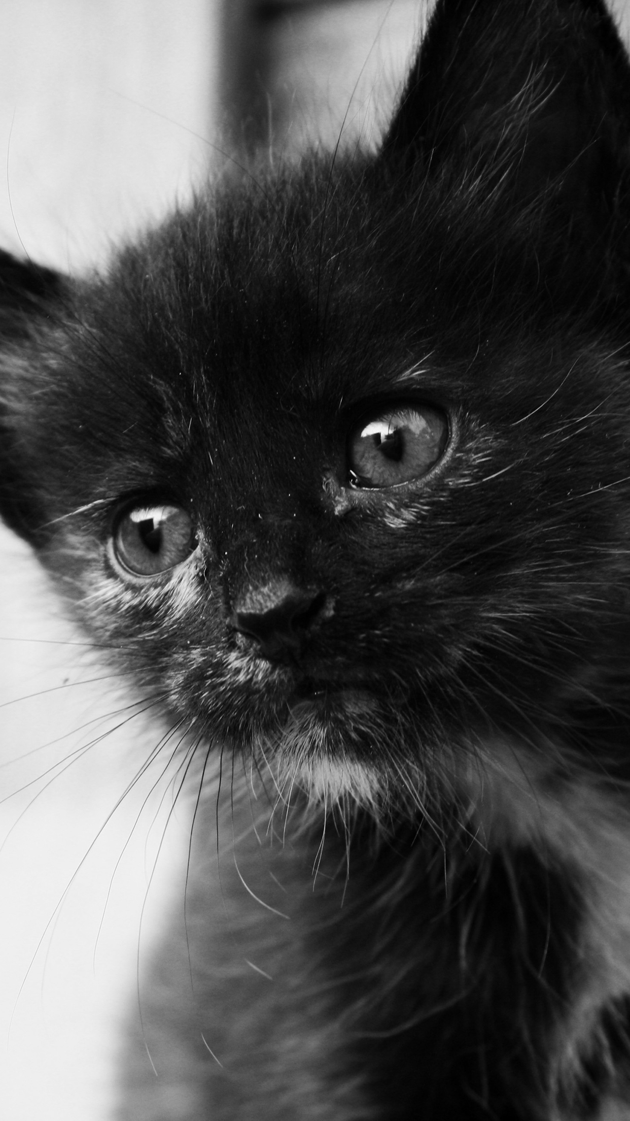 Cat Black and White iPhone 3Wallpapers Parallax Cat Black and White