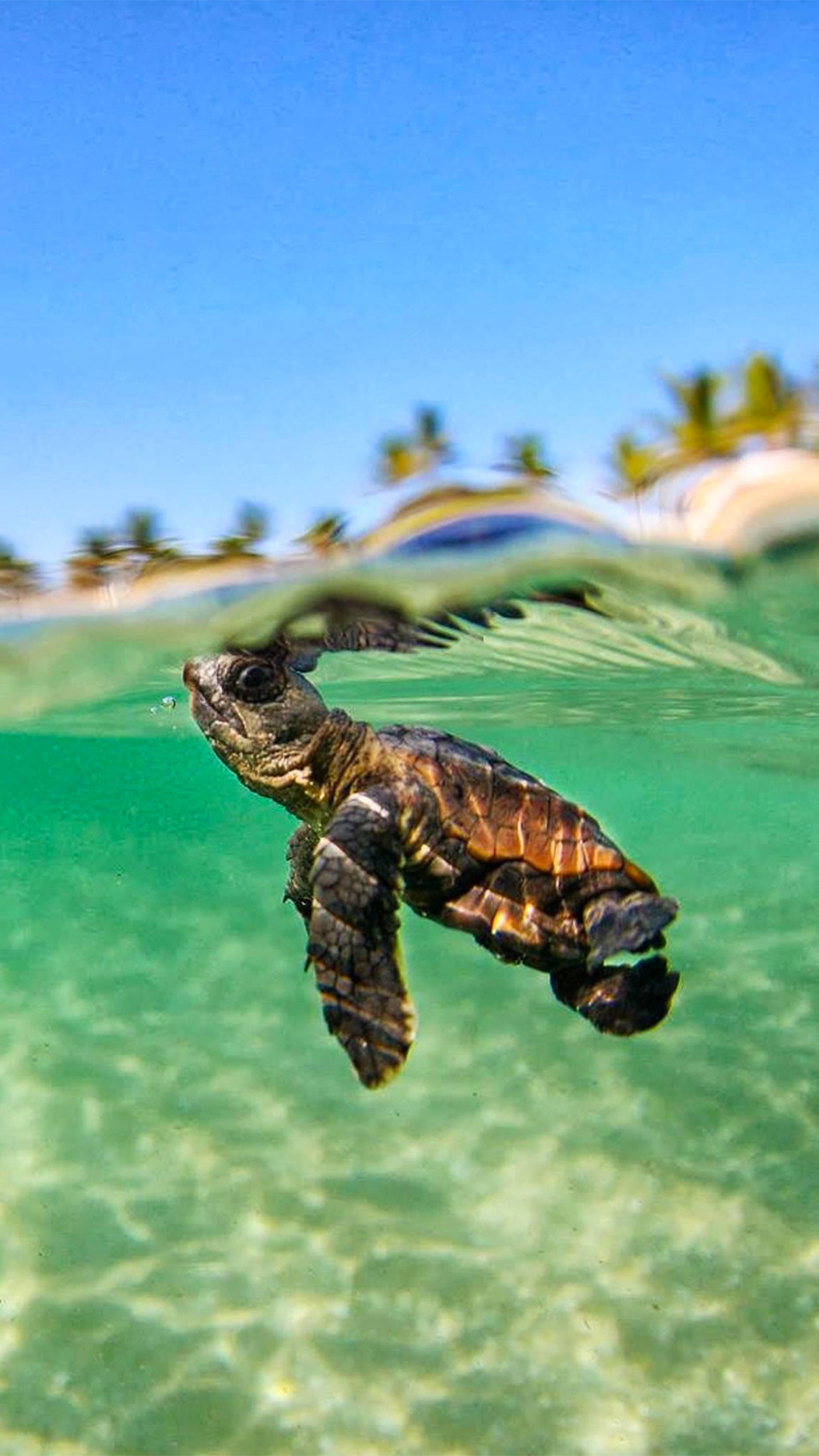 Turtle Lagon Wallpaper For Iphone X 8 7 6 Free