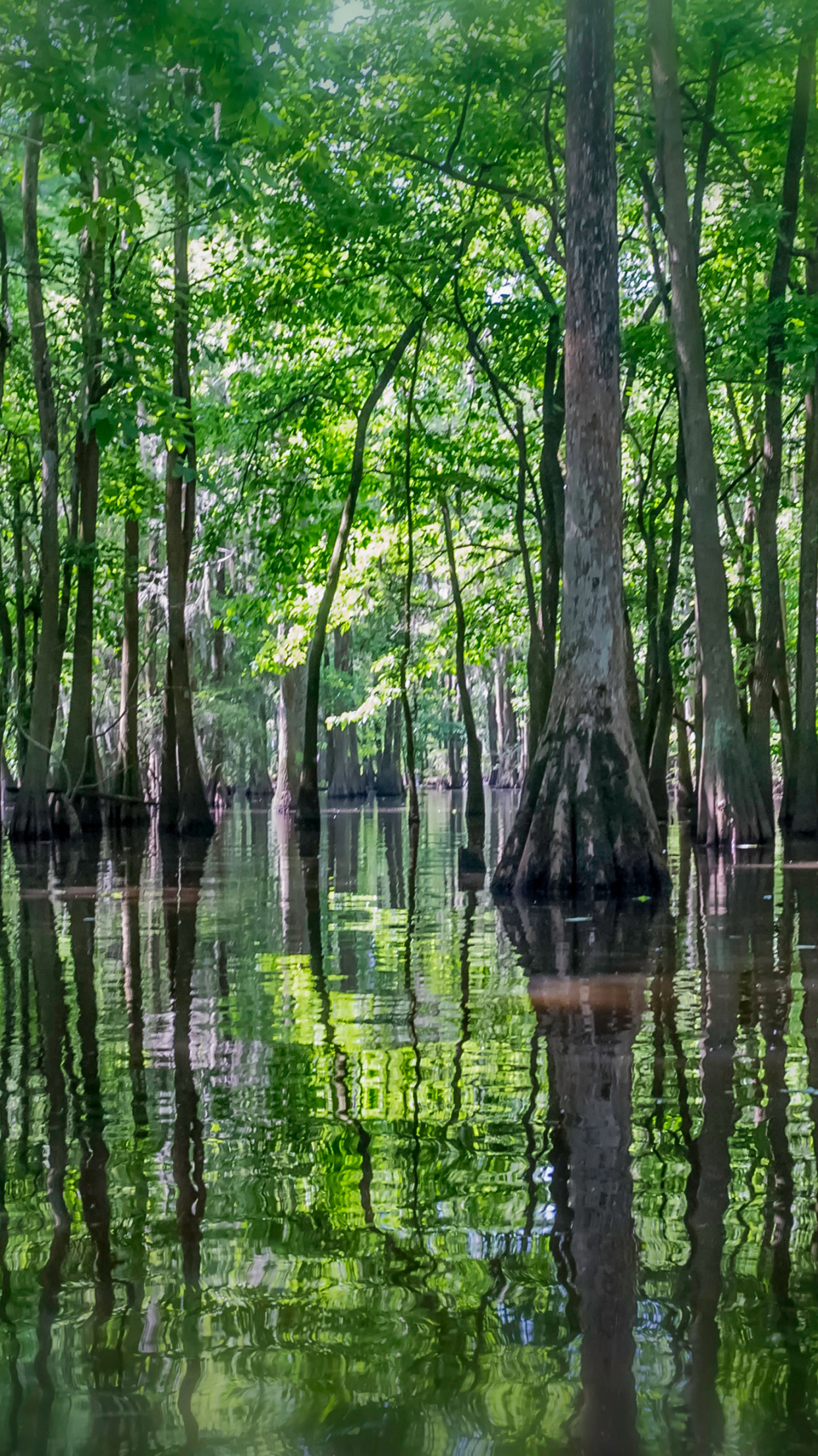 Swamp iPhone 3Wallpapers Parallax Swamp
