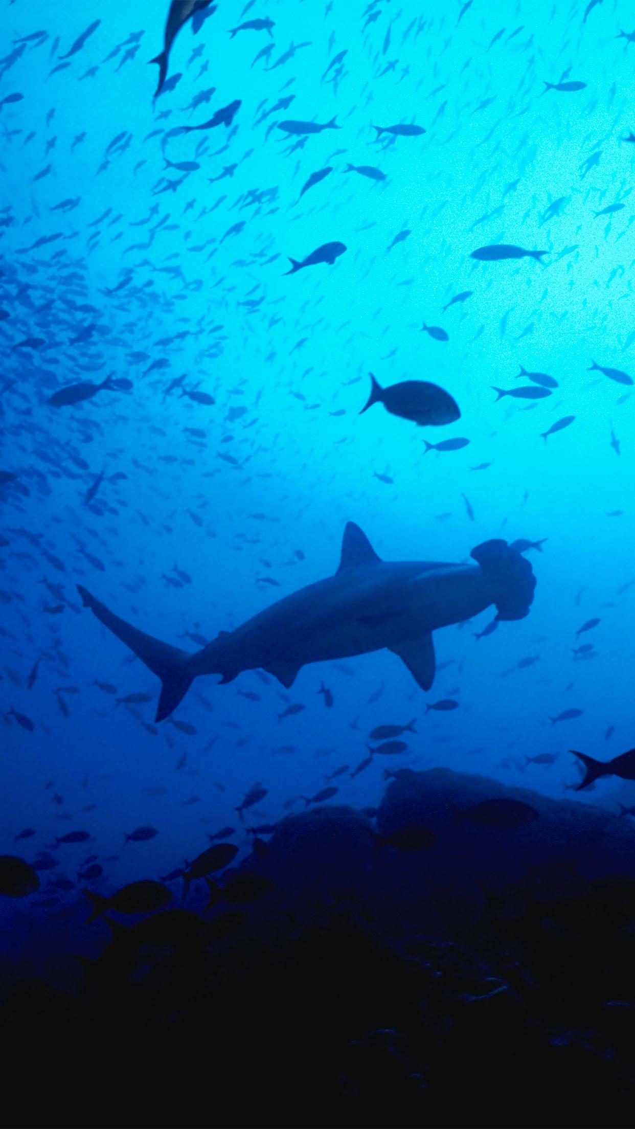 Wallpaper HD iPhone X 8 7 6 Shark Ocean Fish Free Download