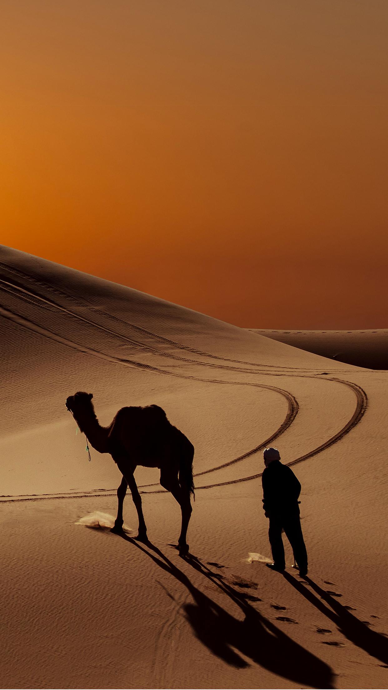 Camel Desert Wallpaper For Iphone X 8 7 6 Free Download