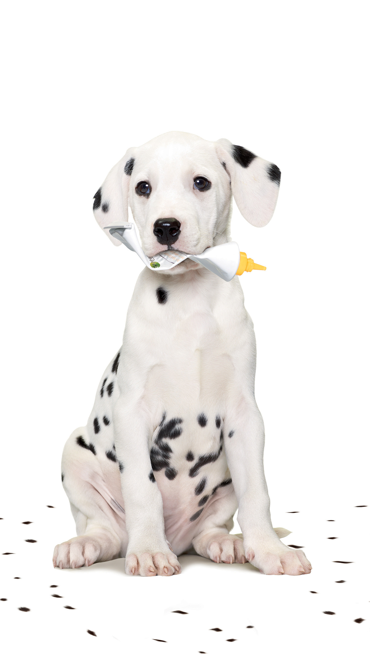 Dalmatian Baby iPhone 3Wallpapers Parallax Les 3 Wallpapers iPhone du jour (17/05/2015)