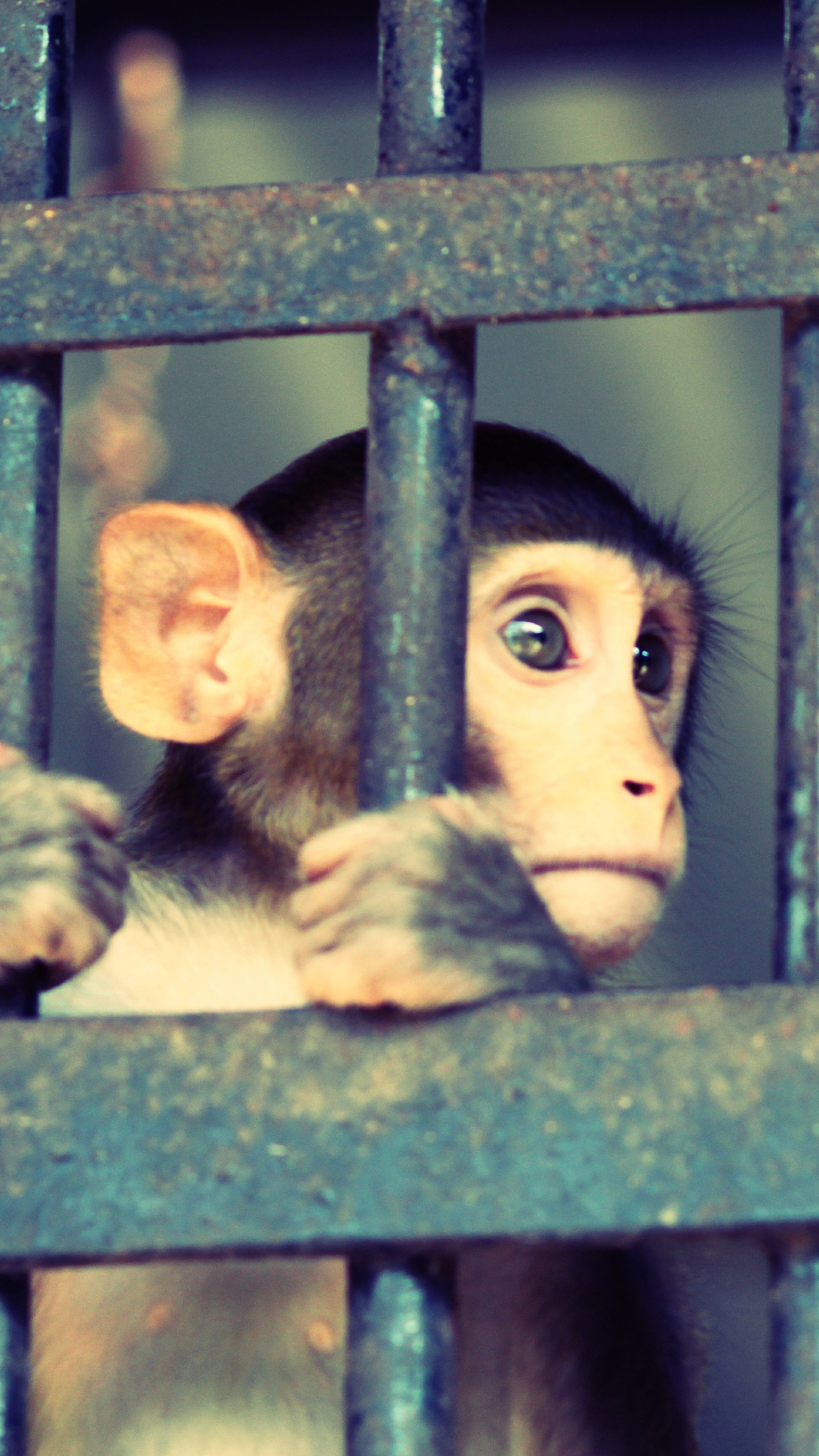 Monkey Jail 3Wallpapers iPhone Parallax Les 3 Wallpapers iPhone du jour (02/06/2015)