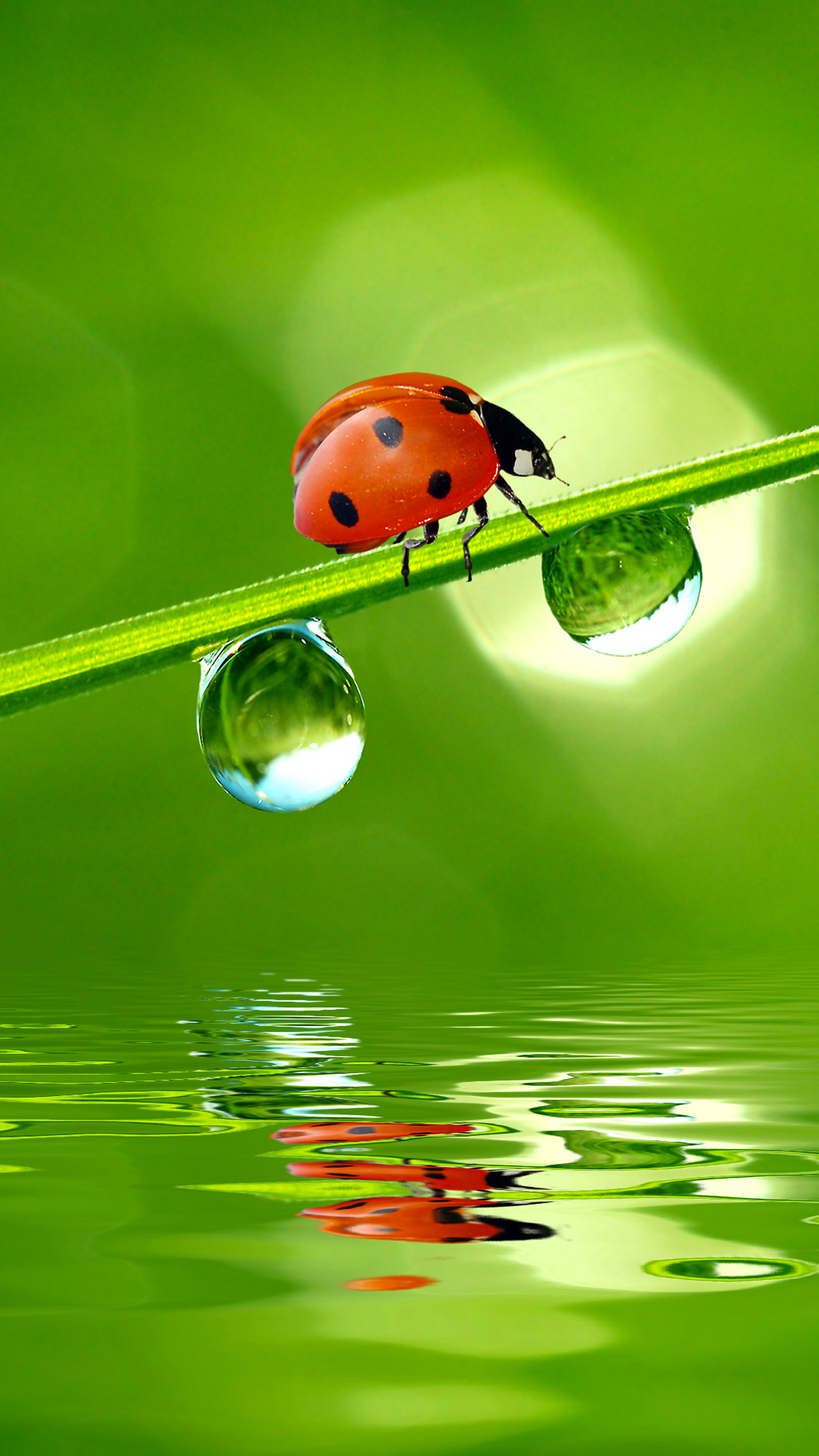 Ladybird water 3Wallpapers iPhone Parallax Ladybird water