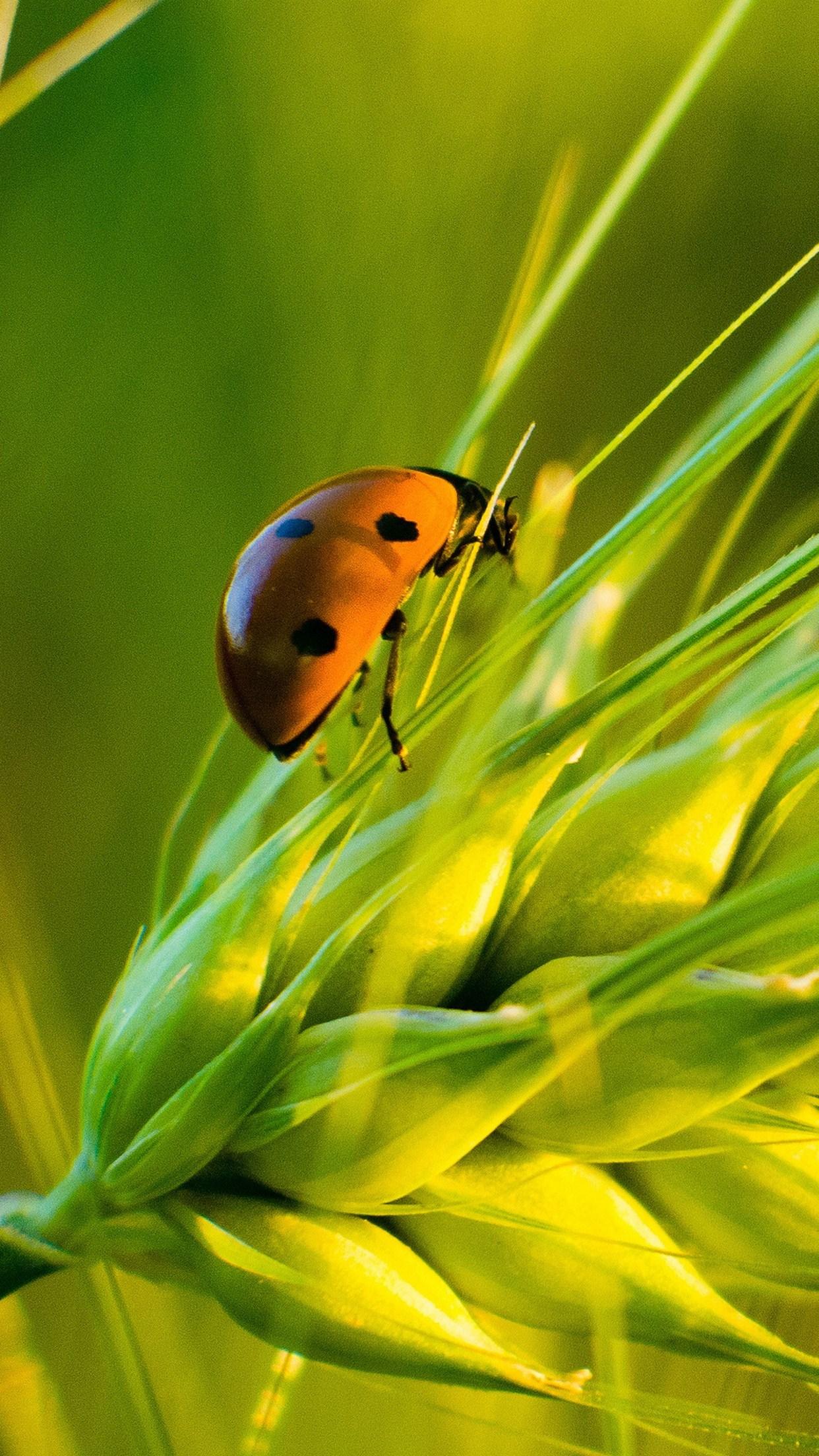 macro ladybug 3Wallpapers iPhone Parallax Macro Ladybug