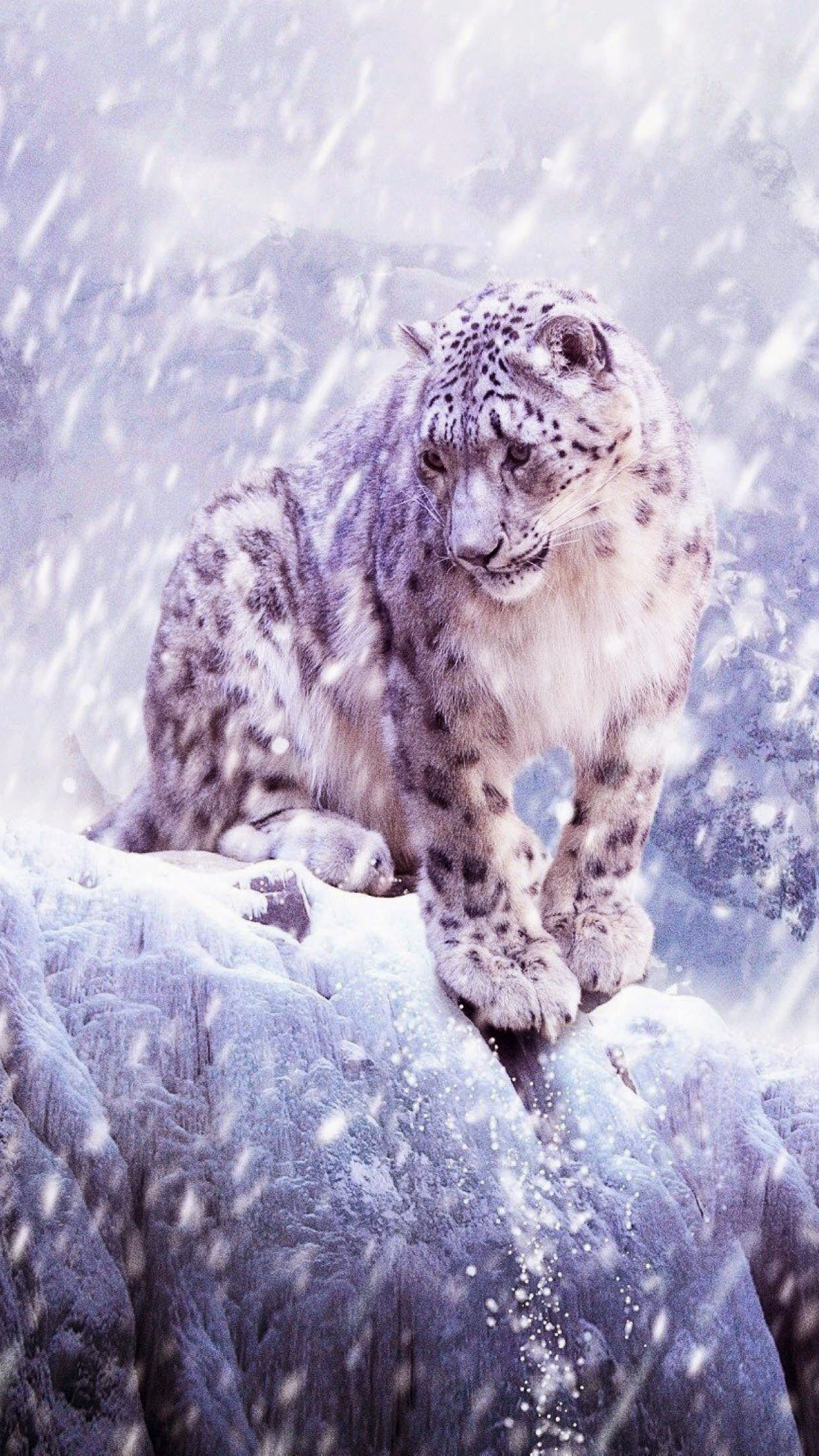 Leopard Of Snow Wallpaper For Iphone 11 Pro Max X 8 7 6 Free Download On 3wallpapers