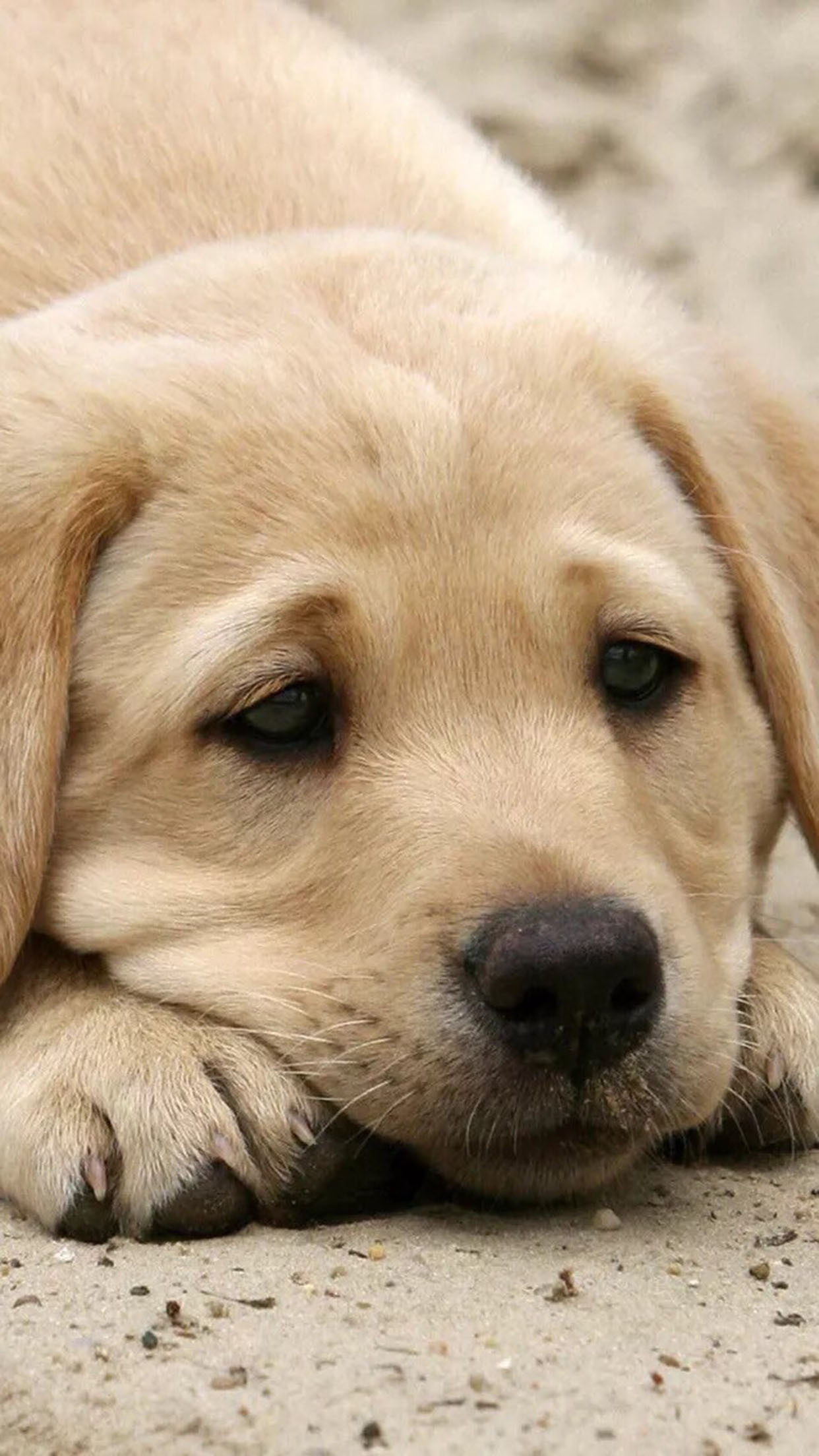 Dog Dog 2 3Wallpapers iPhone Parallax Dog 2