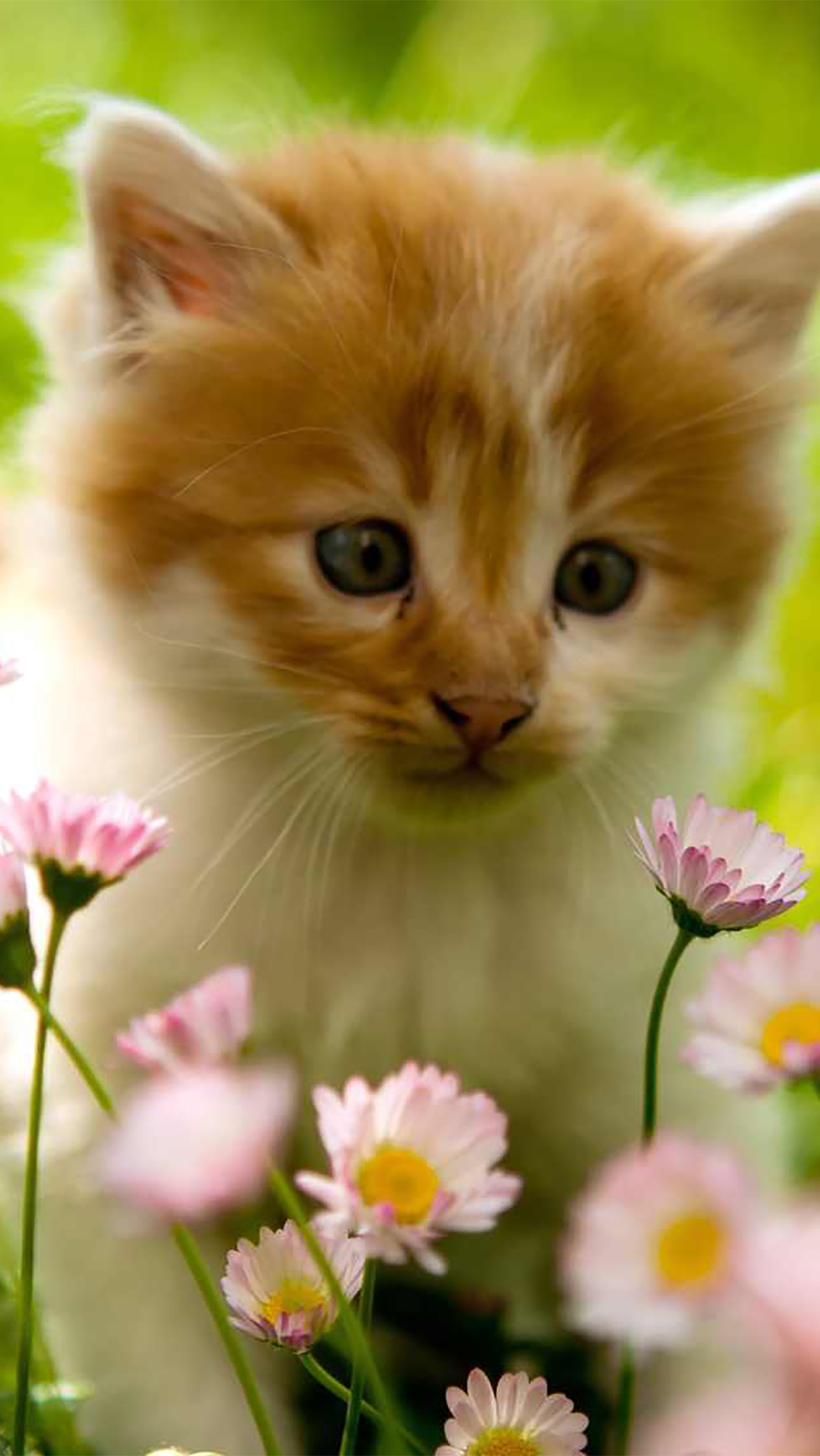 Cat Cat in Flowers 3Wallpapers iPhone Parallax Cat : Cat in Flowers
