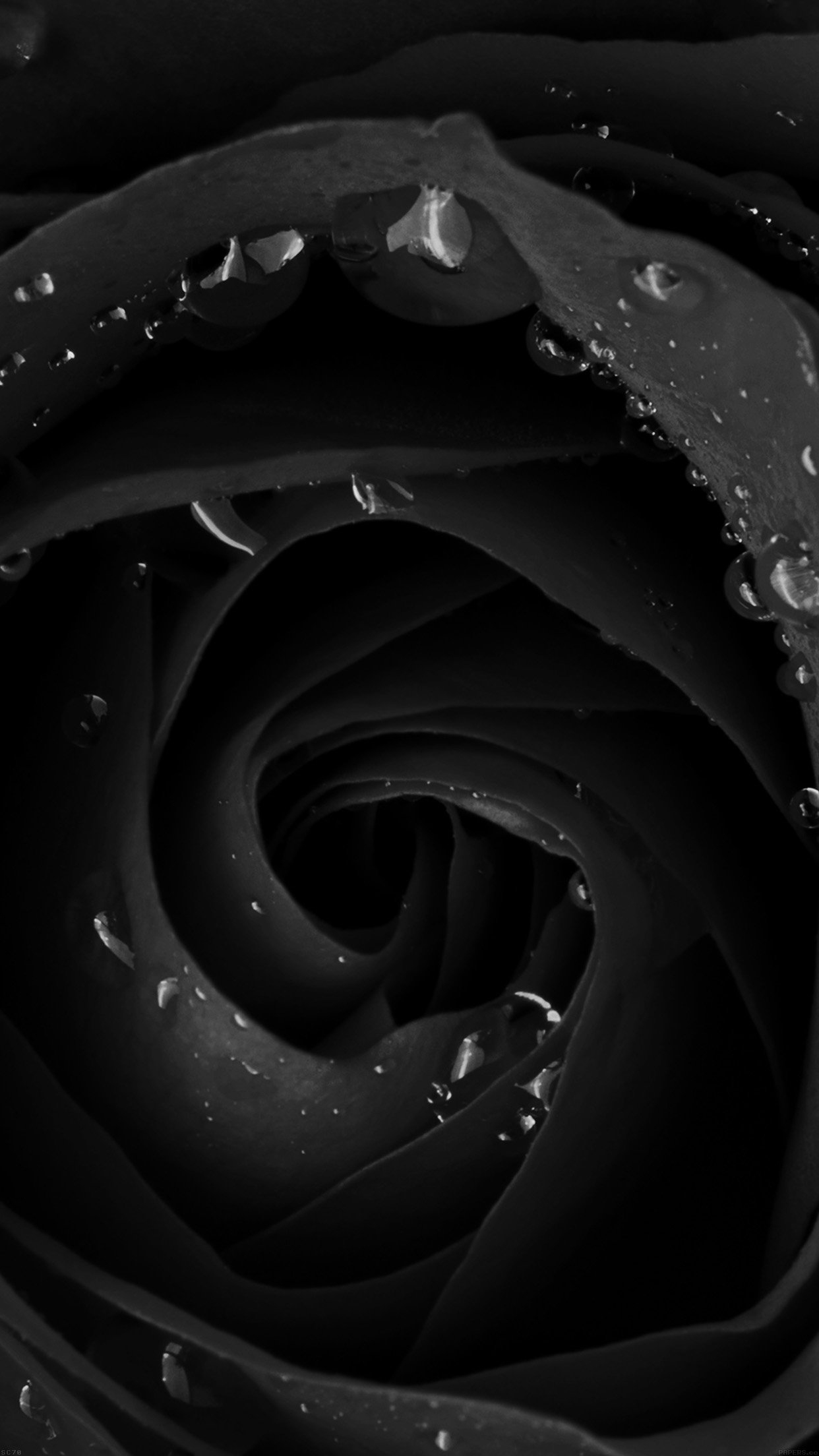 Wallpaper Hd Iphone Flower Dark Background Dark Rose