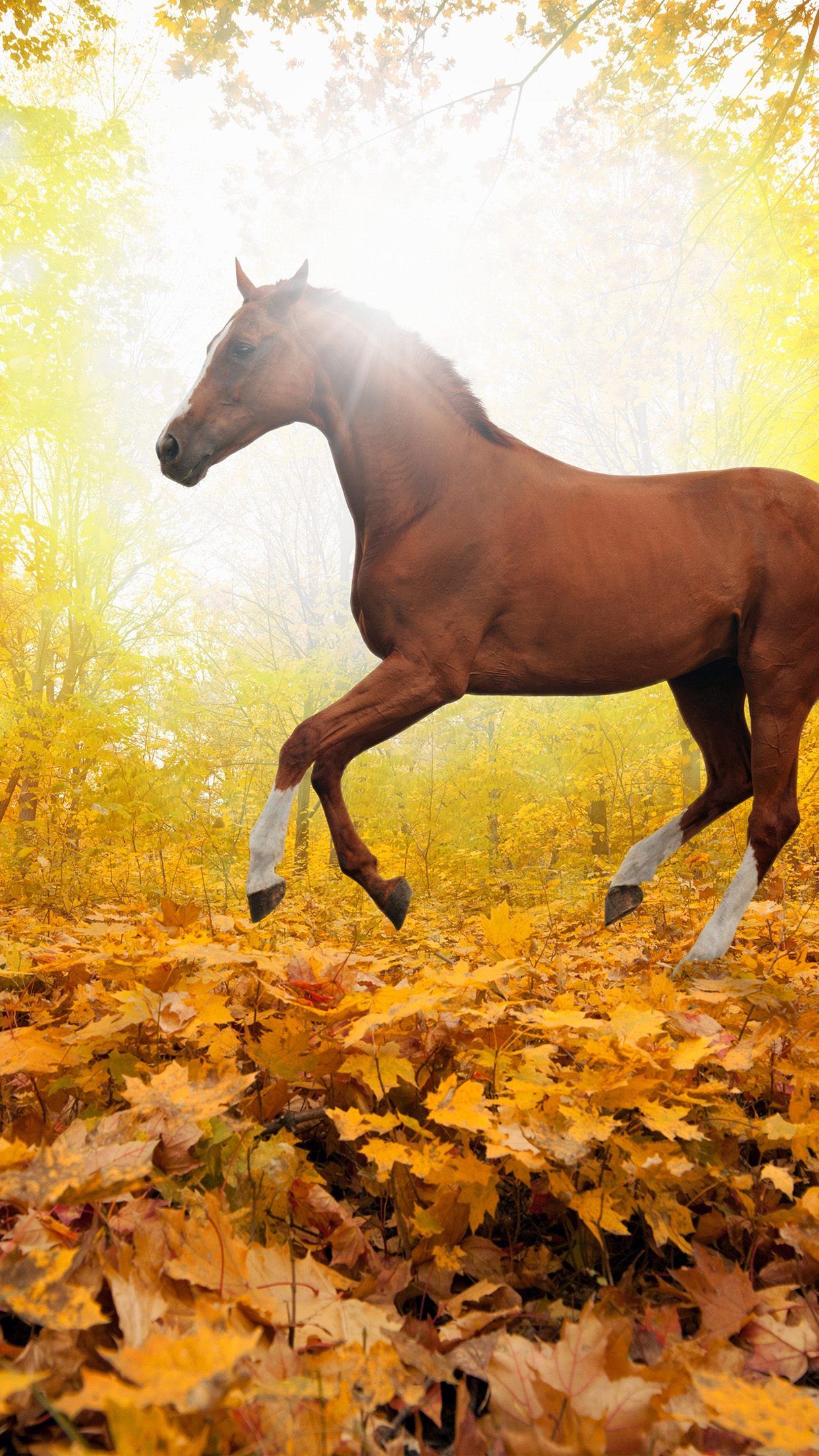 Horse Fall leaf mountain red 3Wallpapers iPhone Parallax Horse: Fall leaf mountain red