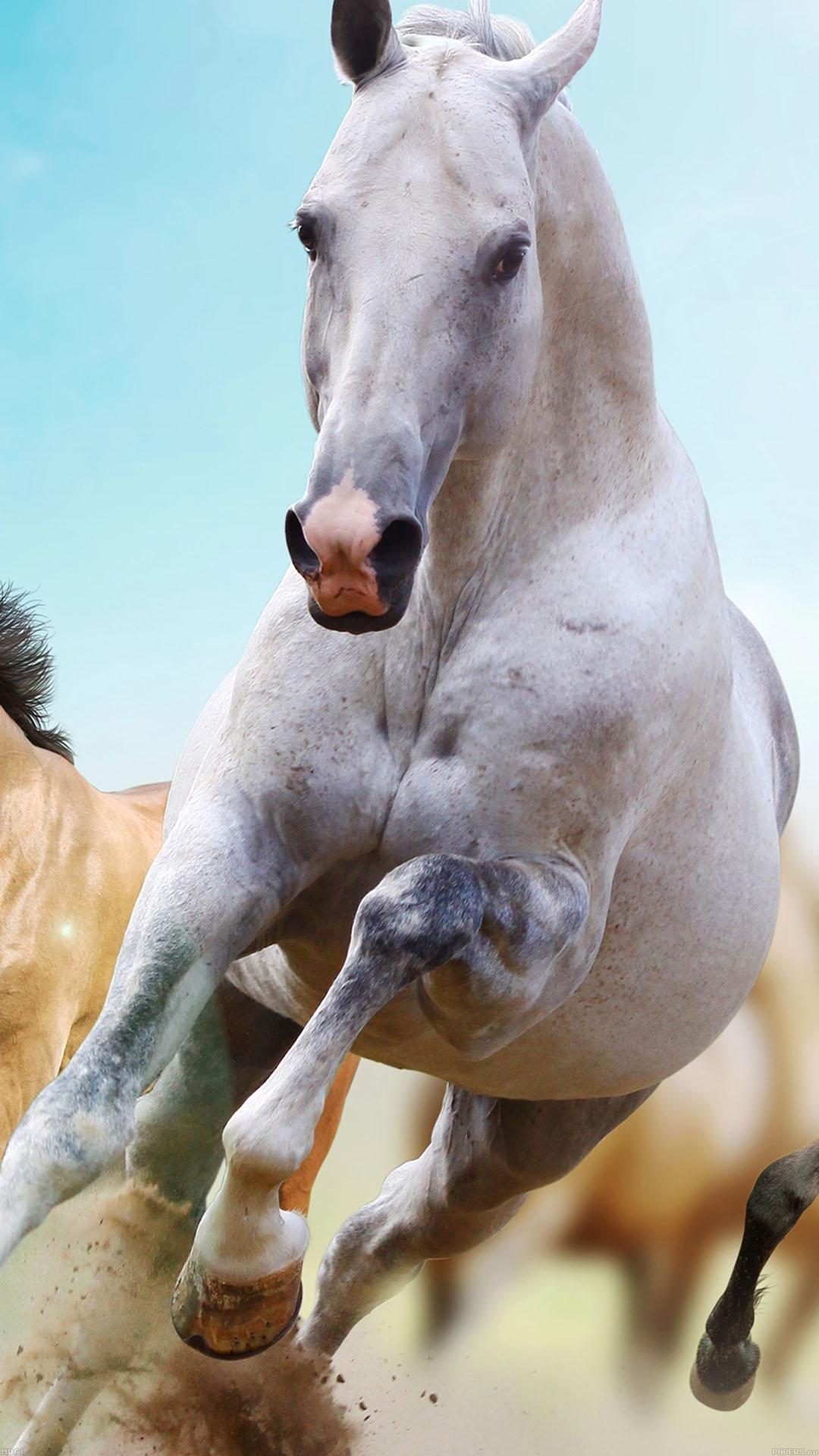 Horses Run 3Wallpapers iPhone Parallax Horse: Run