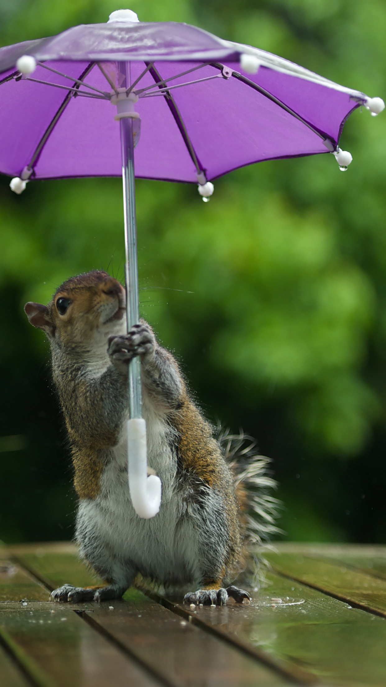 Umbrella Squirrel 3Wallpapers iPhone Parallax Les 3Wallpapers iPhone du jour (13/01/2017)