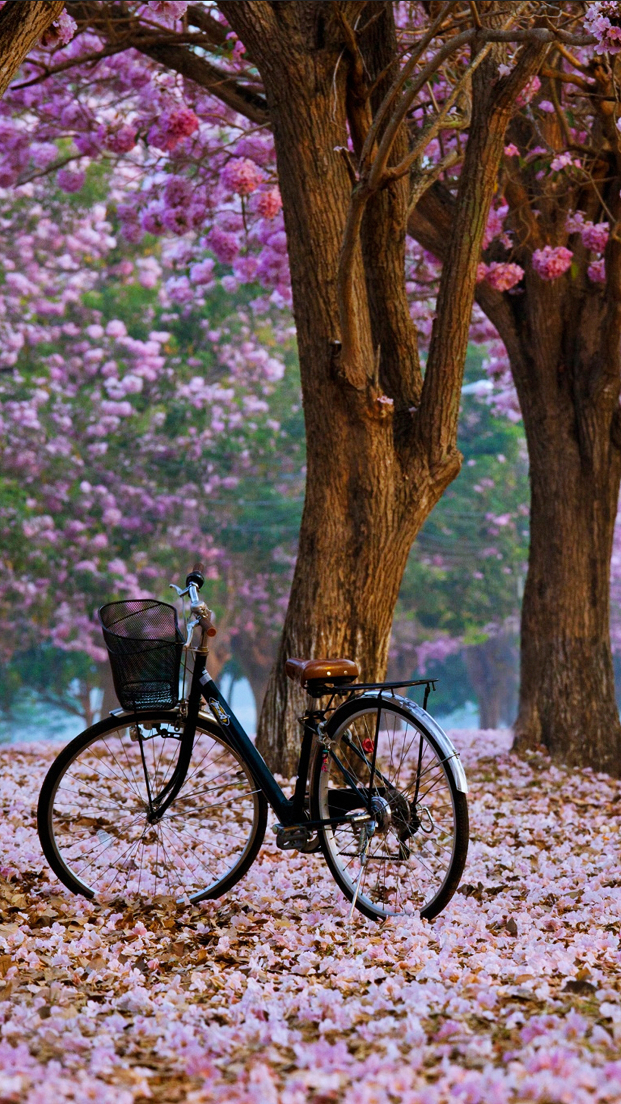 Spring Bike Wallpaper For Iphone X 8 7 6 Free