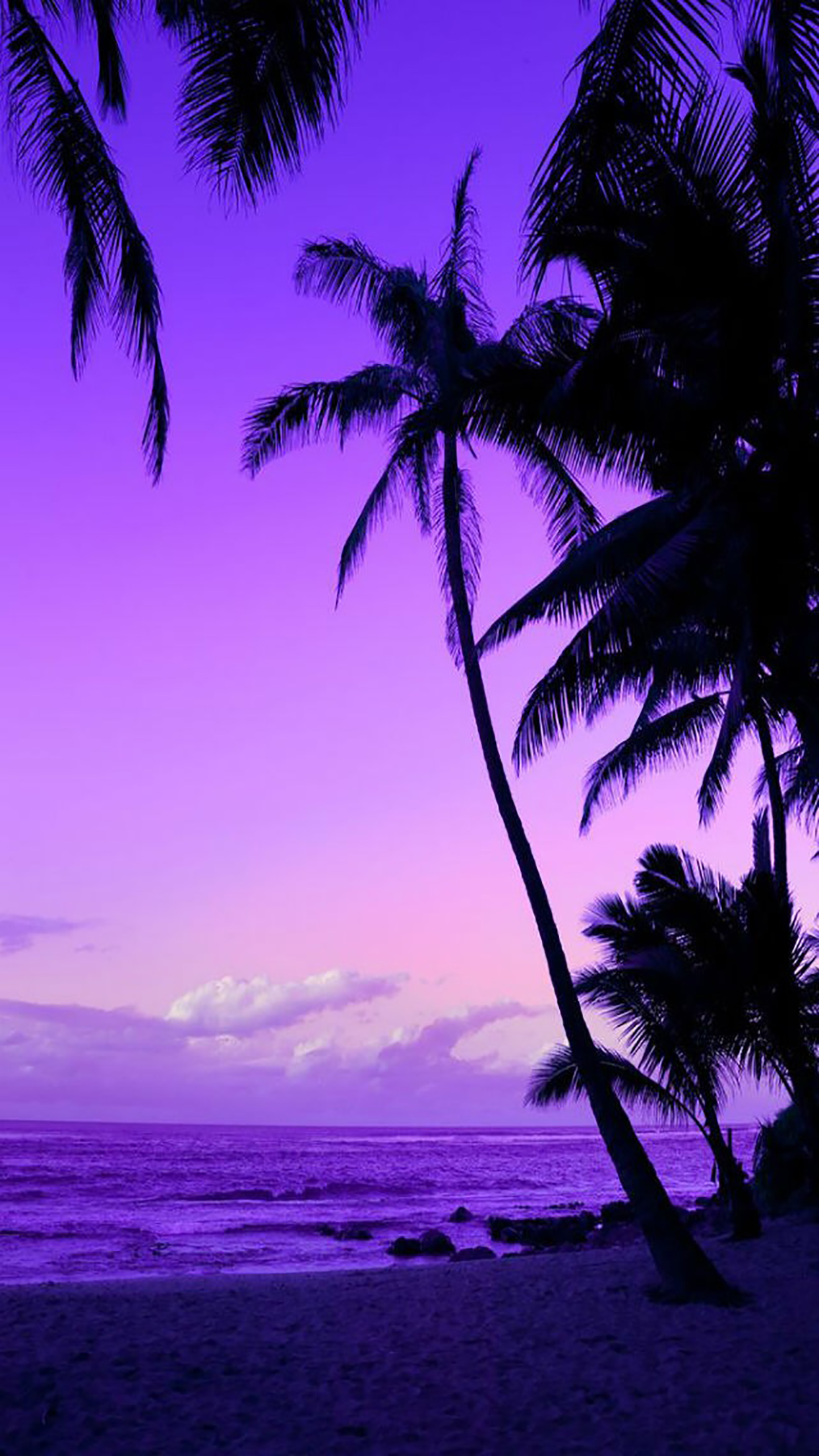 Coconut Palm 2 3Wallpapers iPhone Parallax Coconut Palm : 2