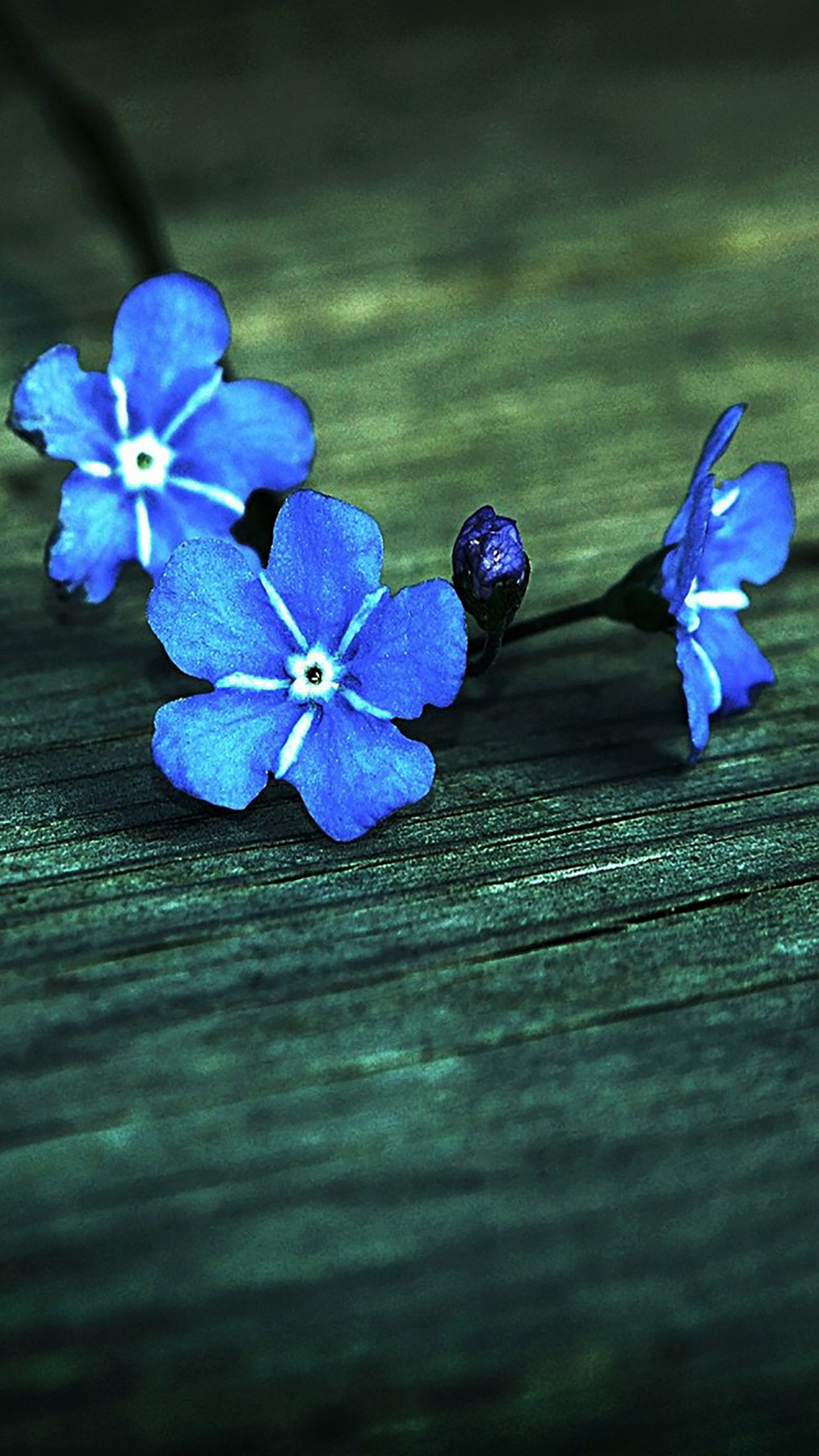 Flowers Blue 3Wallpapers iPhone Parallax 3Wallpapers : notre sélection de fonds décran du 22/07/2017