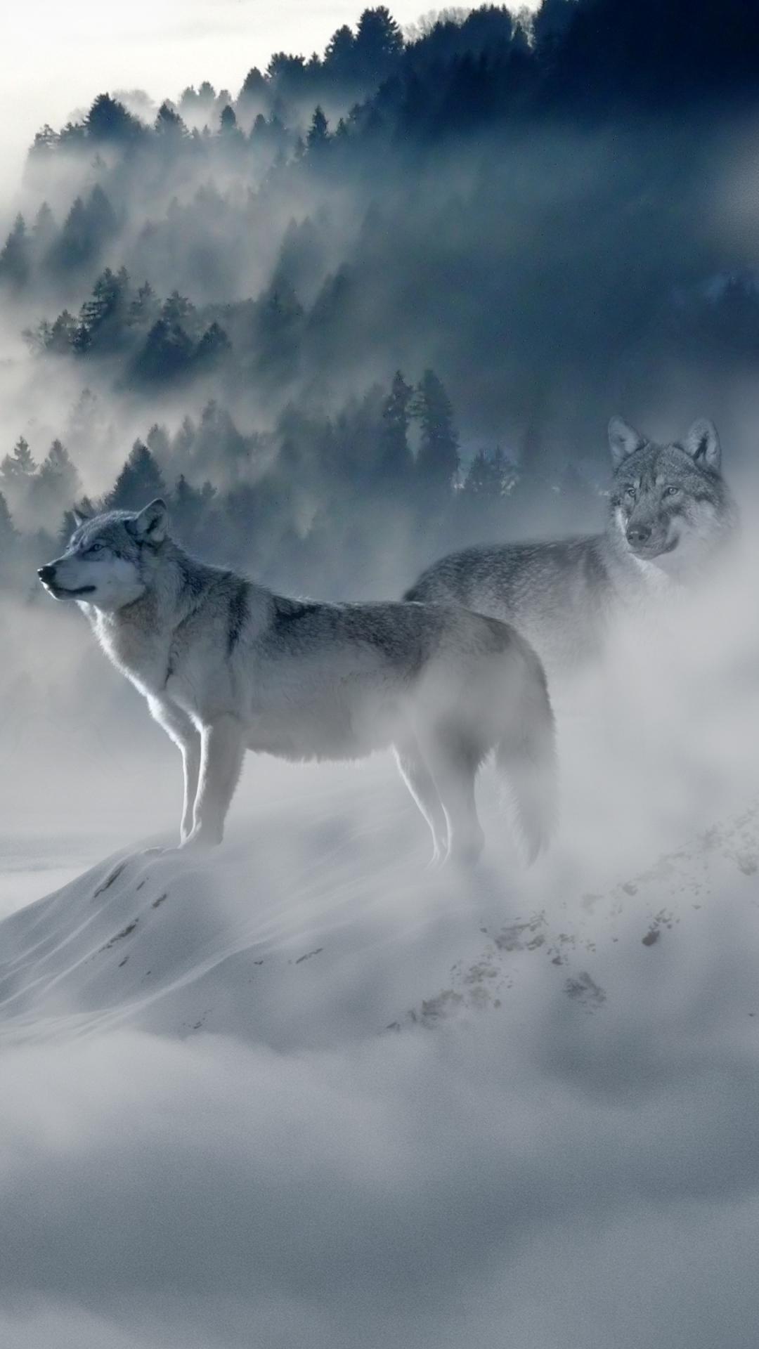 iphone wallpaper wolf wolves predators fog snow mountains 3Wallpapers : notre sélection de fonds décran iPhone du 19/08/2017