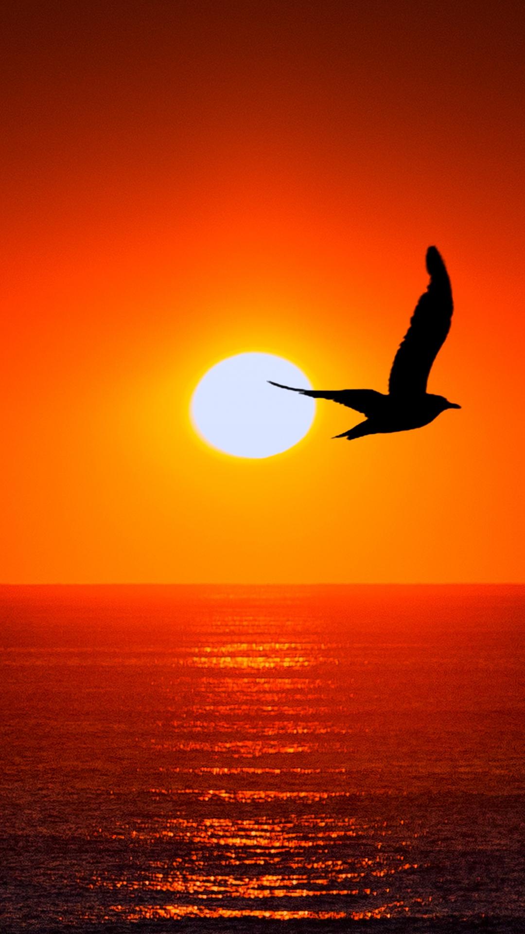 bird silhouette sun sea sky 3Wallpapers : notre sélection de fonds d'écran du 28/09/2017
