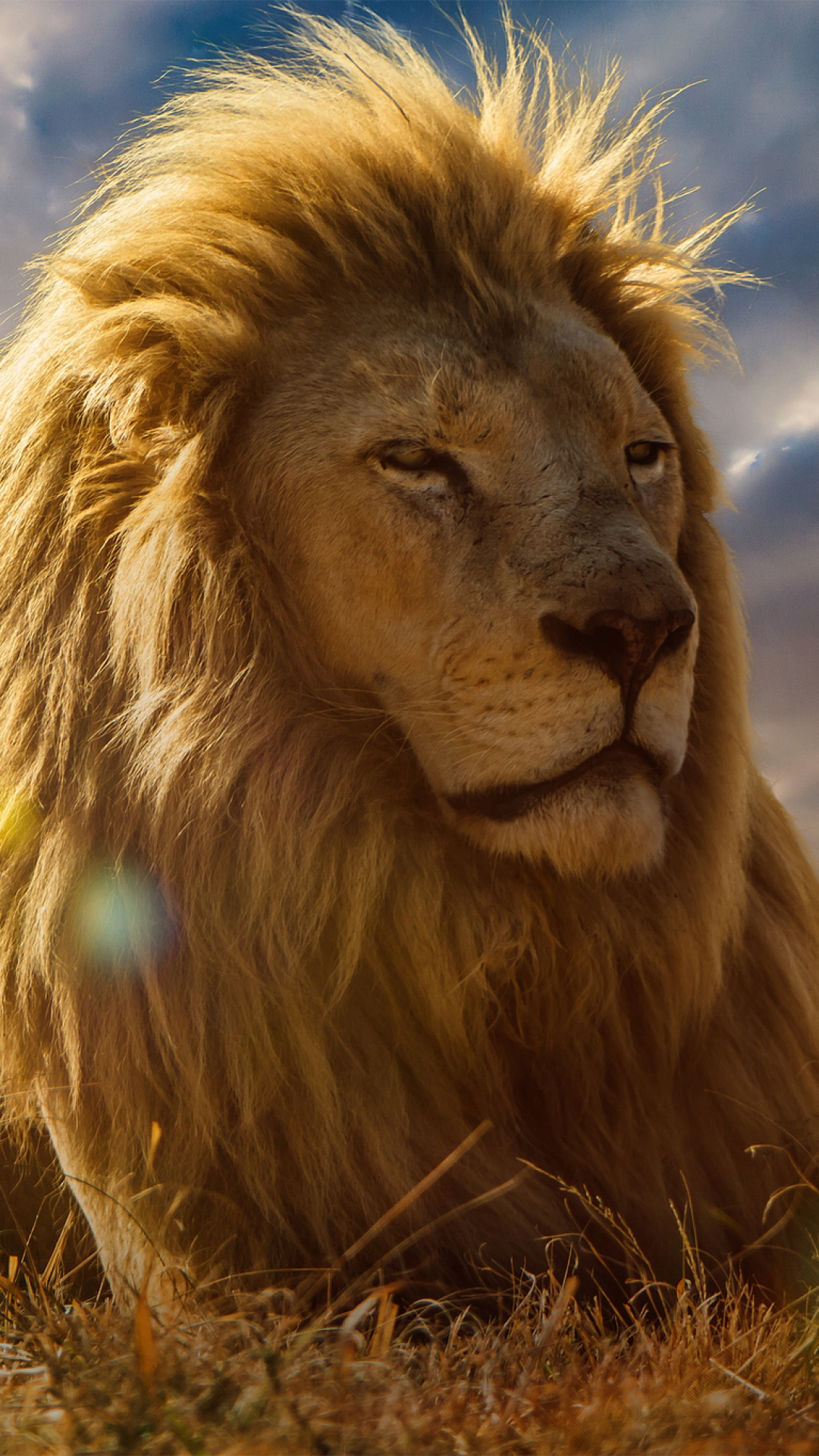 iphone wallpaper lion king Lion