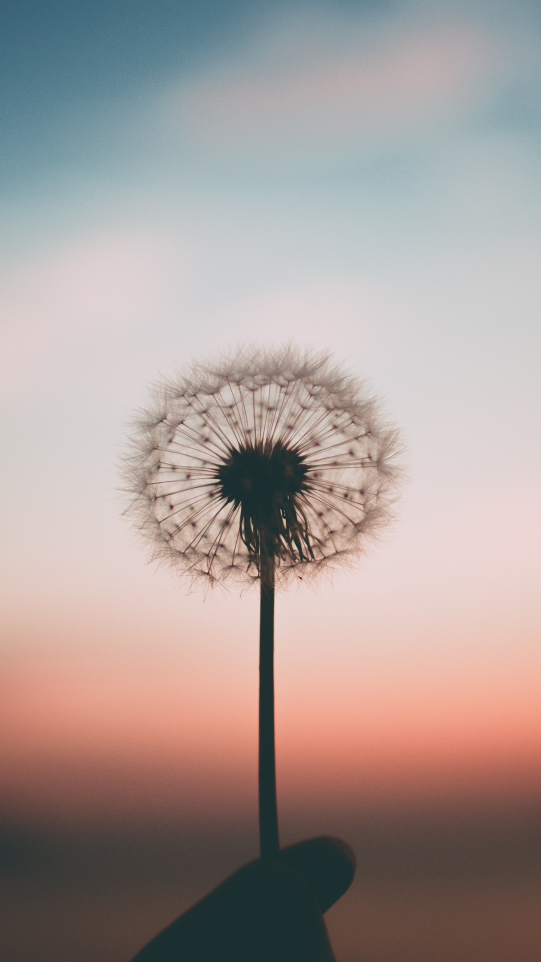 iphone wallpaper dandelion blur 3Wallpapers : notre sélection de fonds d'écran du 02/11/2017