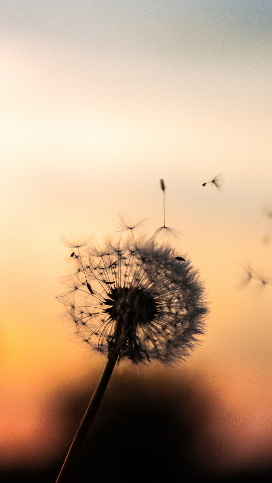iphone wallpaper dandelion down 3Wallpapers : notre sélection de fonds d'écran du 02/11/2017