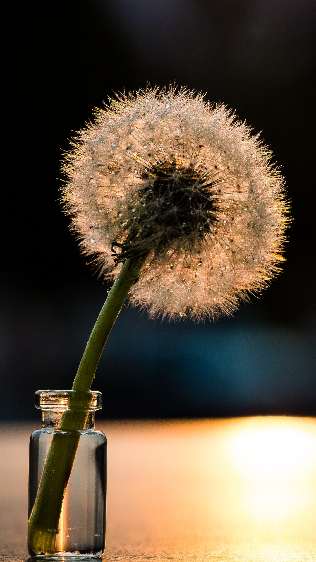 iphone wallpaper dandelion light Dandelion