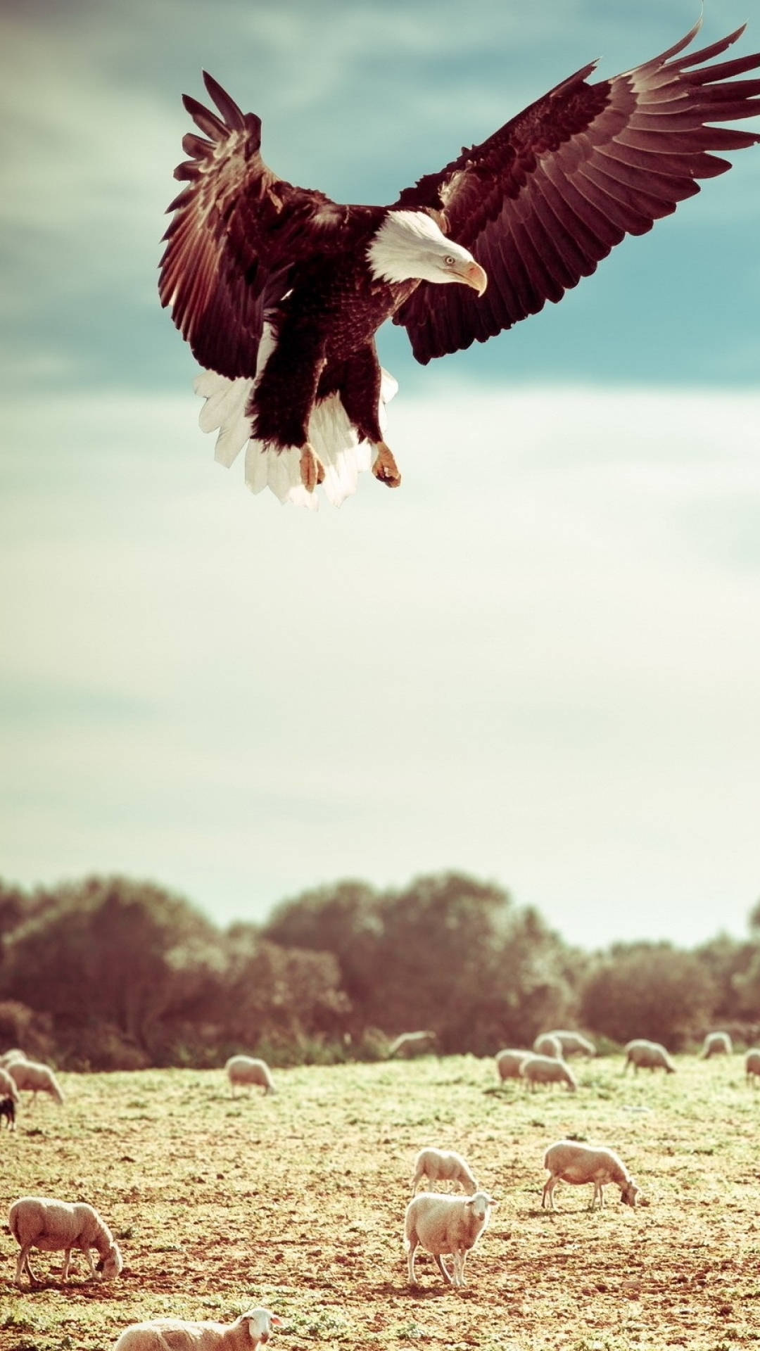 iphone wallpaper eagle field Eagle