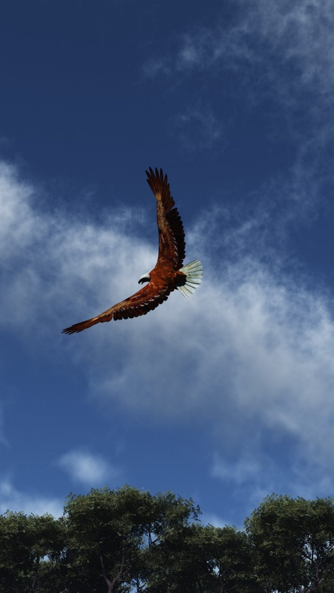 iphone wallpaper eagle sky clouds 3Wallpapers : notre sélection de fonds d'écran du 30/11/2017