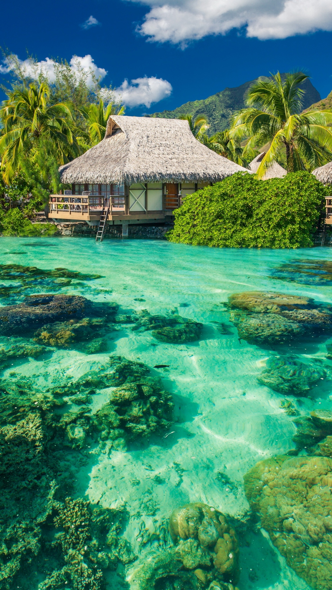 iphone wallpaper paradise Les 3Wallpapers iPhone du jour (18/12/2017)